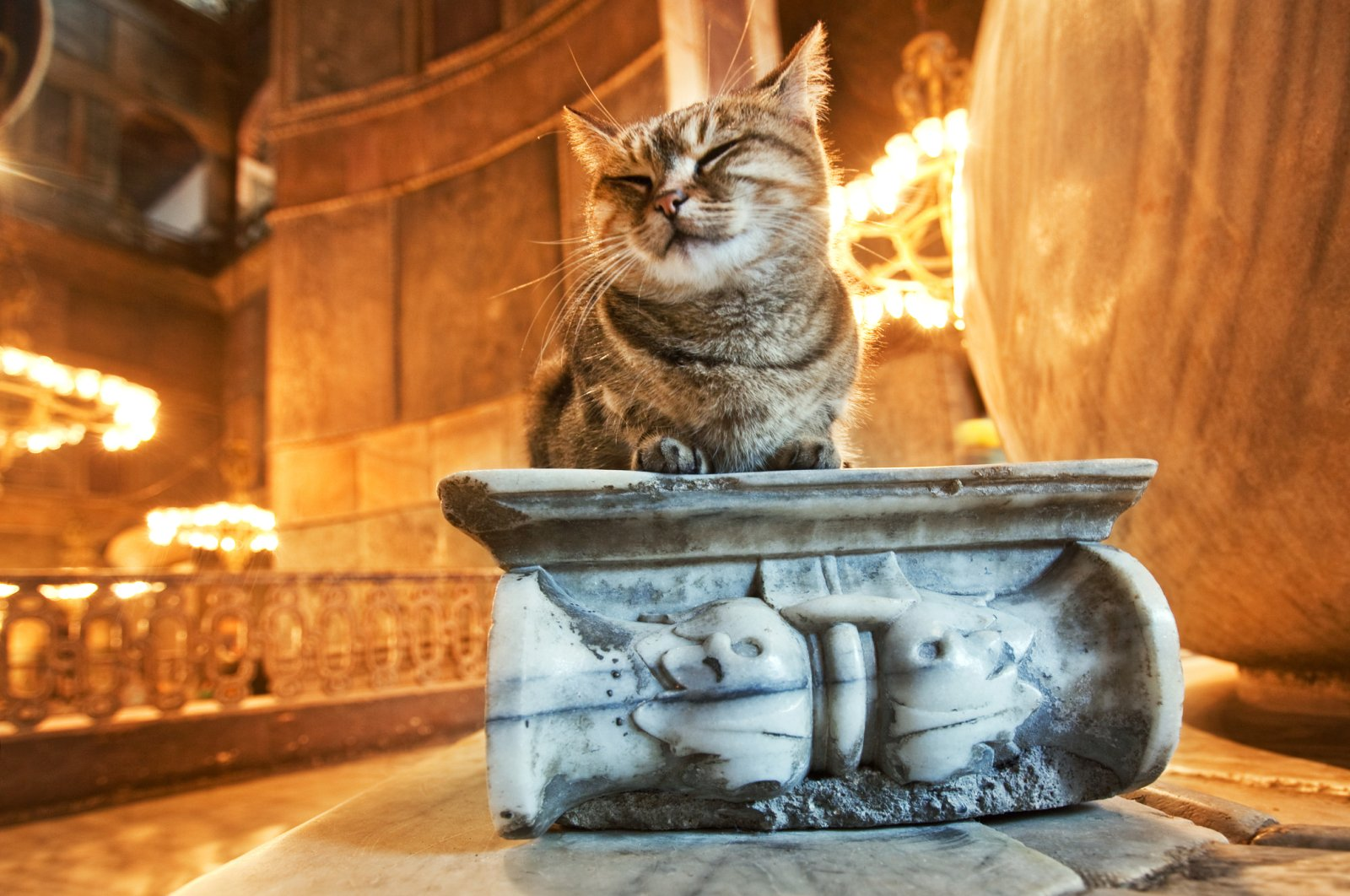 Like this cat that frequents Hagia Sophia, strays have always been welcomed in Istanbul. (iStock Photo)