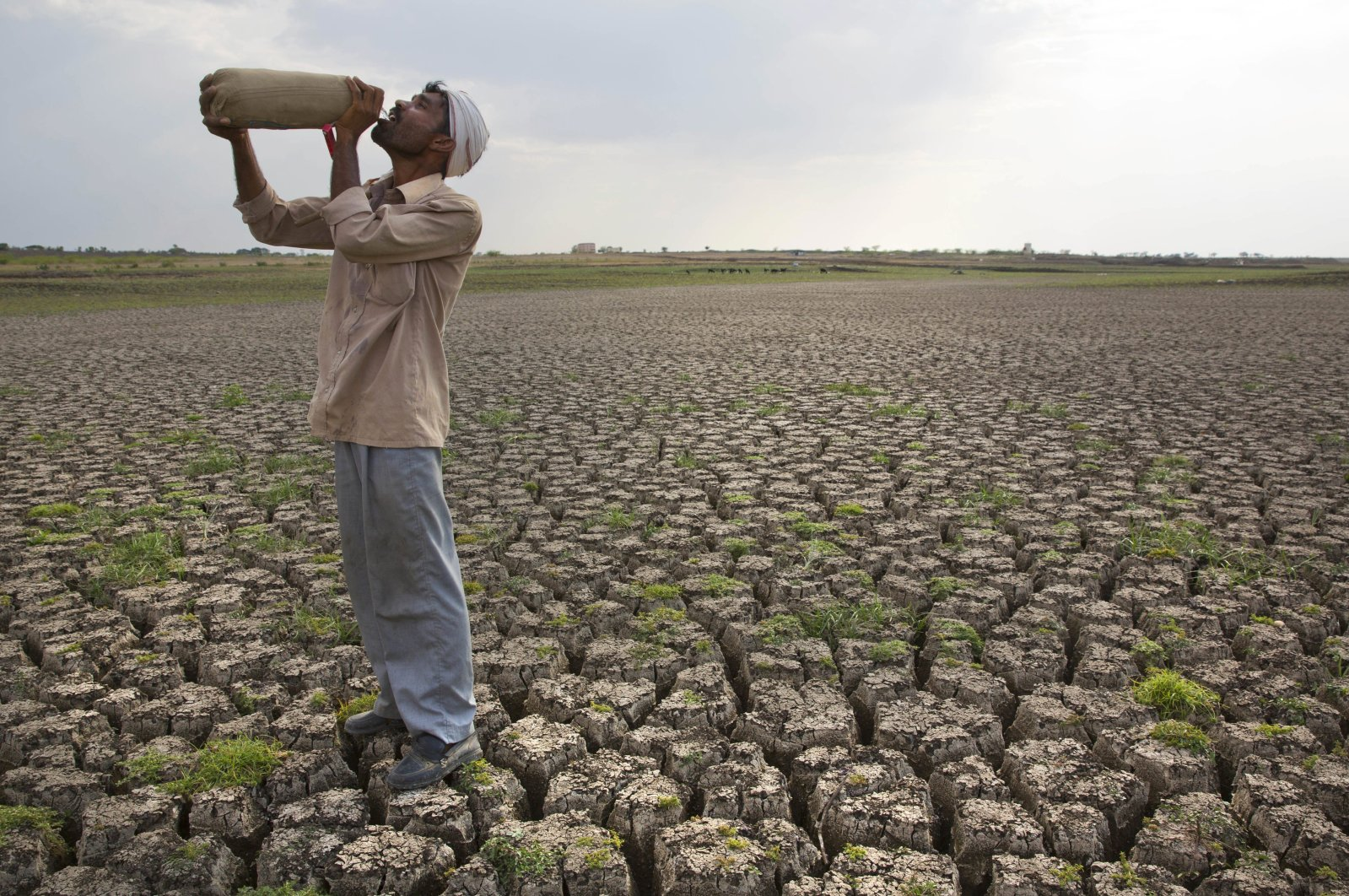 In this May 10, 2016, photo, a Shepard drinks water on the dry bed of Manjara Dam, which supplies water to Latur and nearby villages in Marathwada region, in the Indian state of Maharashtra. Many people are forced to leave their hometown due to changes in their local environment.  (AP Photo)