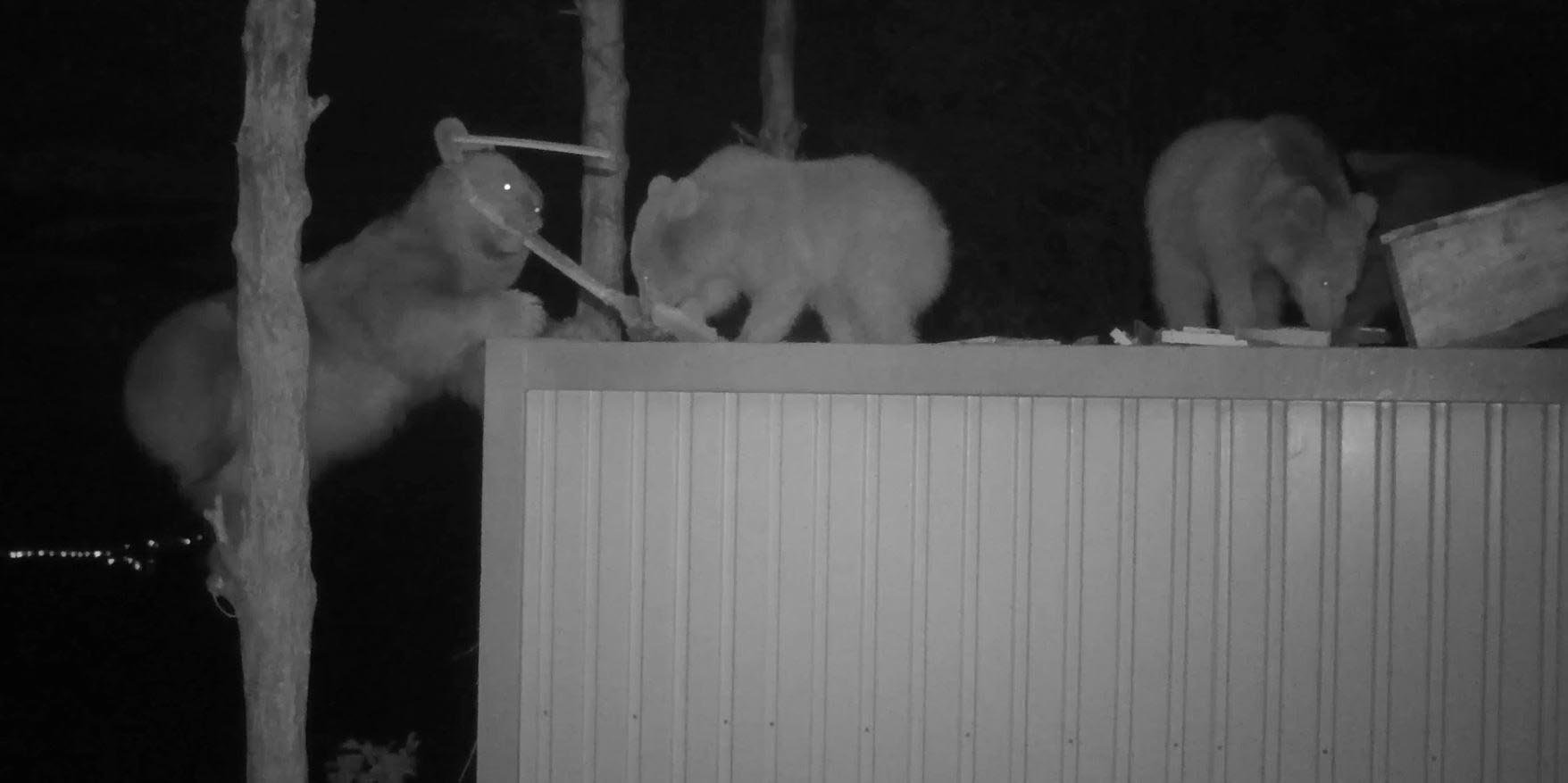 Bears caught on security cameras are seen eating hives in the Sürmene district of Trabzon province, Turkey, June 22, 2020. (DHA Photo)