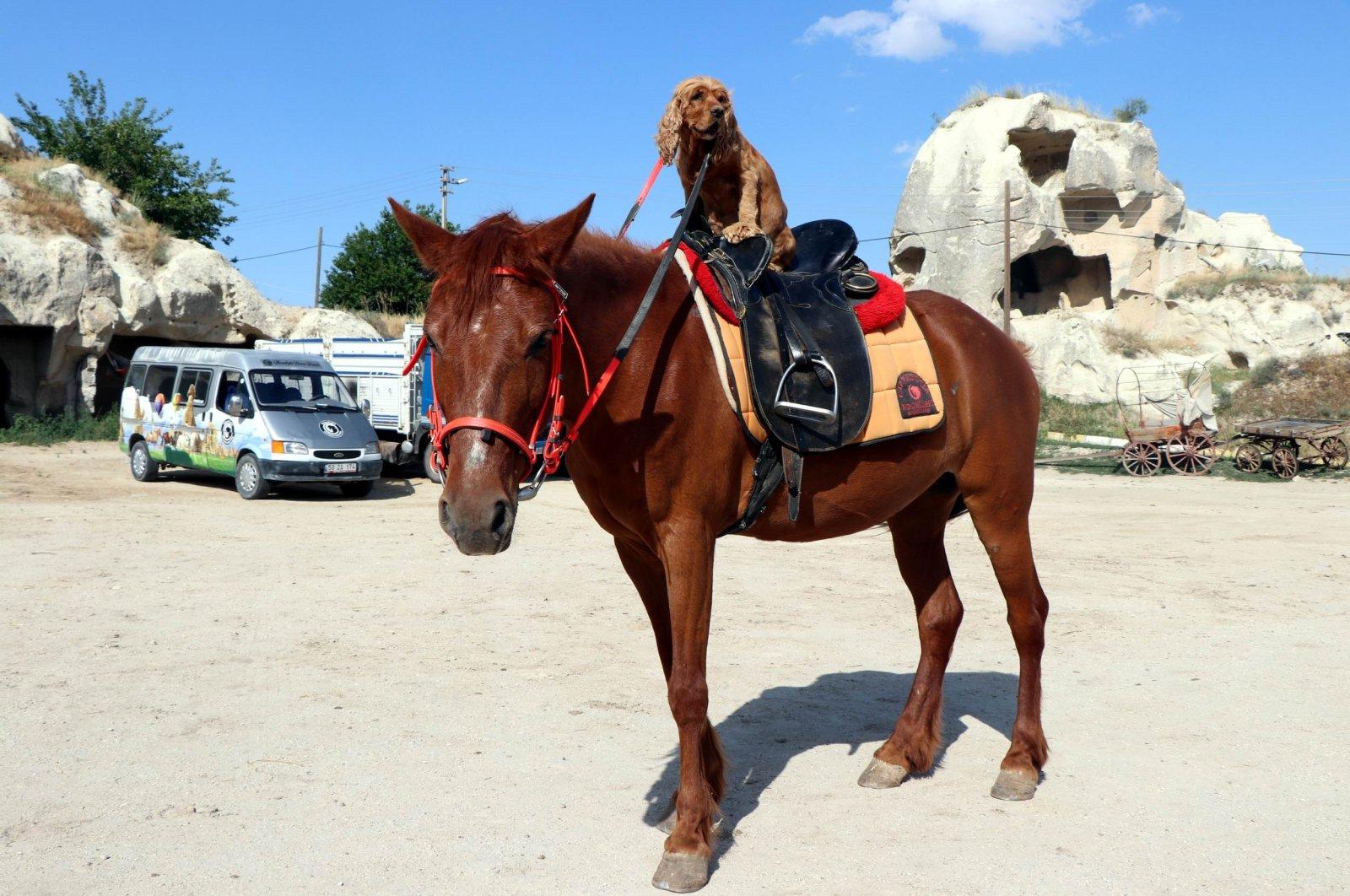 Boncuk rides a horse in Cappadocia, Nevşehir, Turkey, June 22, 2020. (IHA Photo)