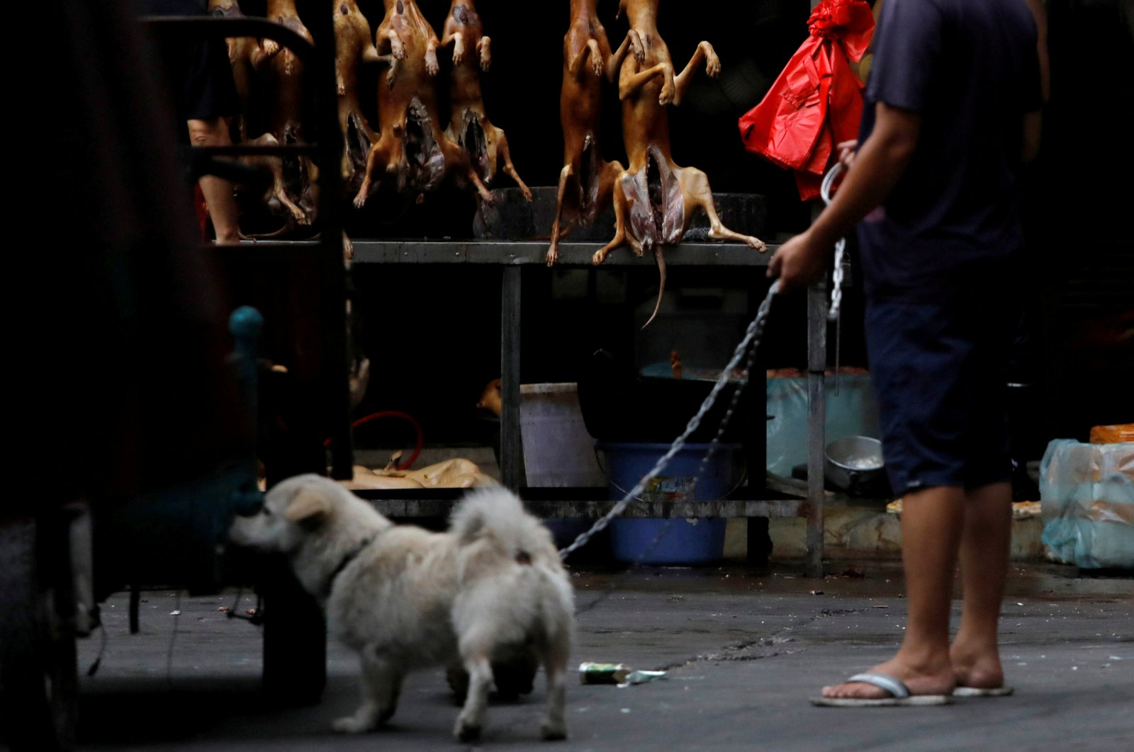 A man walks with his pet dog as he talks to a vendor who sells dog meat at a market during the dog meat festival in Yulin, Guangxi Autonomous Region, China, June 21, 2018. (Reuters Photo)