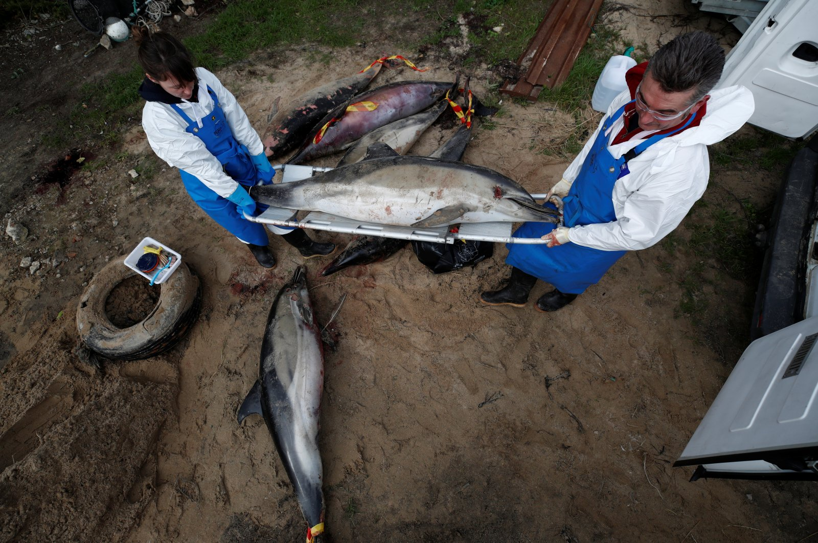 Experts at the Observatoire Pelagis conducting scientific autopsies at municipal technical services in Barbatre on Noirmoutier Island carry a dolphin that was found dead on a beach, France, Feb. 11, 2020. (Reuters Photo)