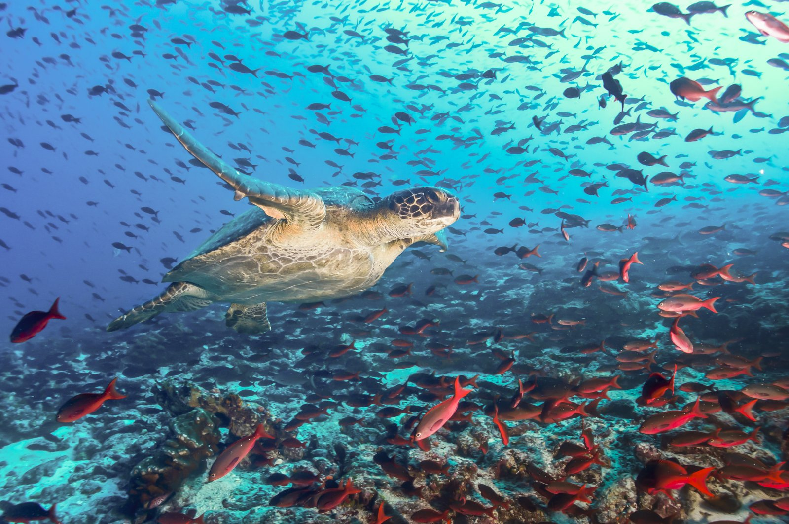 Did you know that the majority of life on Earth is aquatic?
