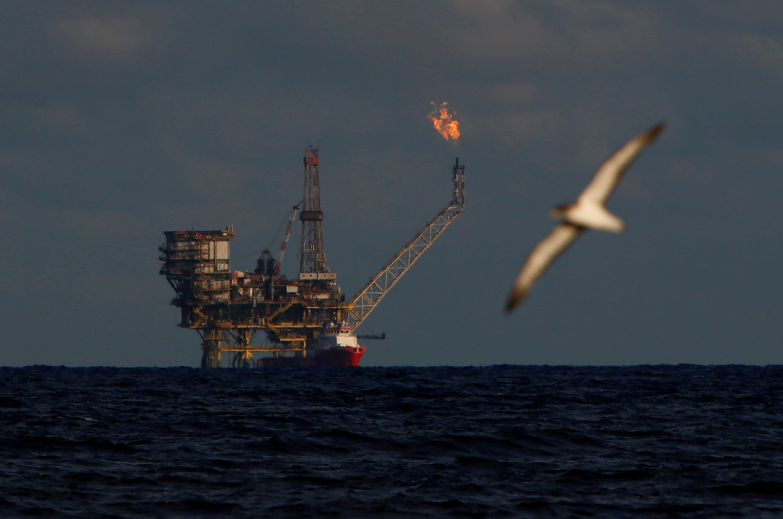 A seagull flies in front of an oil platform in the Bouri Oilfield some 70 nautical miles north of the coast of Libya, October 5, 2017. ( REUTERS Photo)