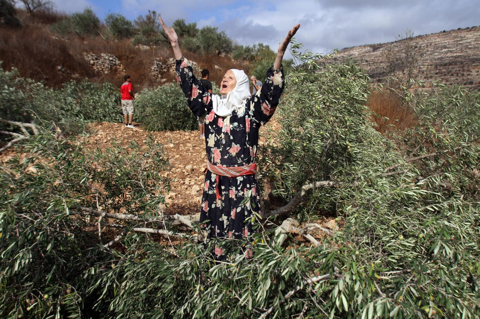 A Palestinian woman throws her arms up in the air in despair next to one of her olive trees in the occupied West Bank, Oct. 23, 2010. (EPA Photo)