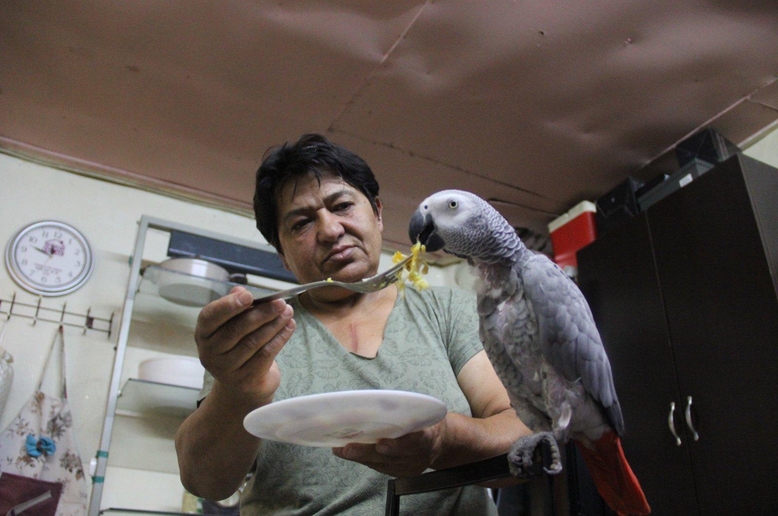 Hateme Karabulut feeds her parrot Sabri, in Sivas, Turkey, June 29, 2020. (AA Photo)