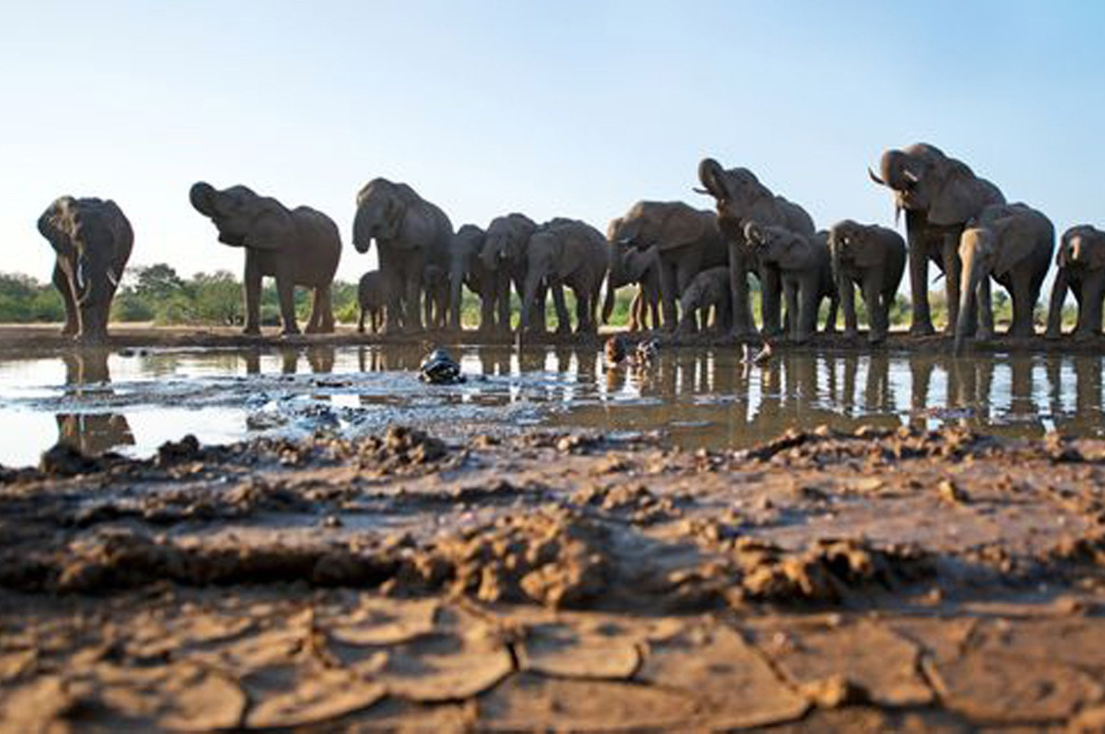 An undated photo shows a herd of elephants in Botswana. (File Photo)