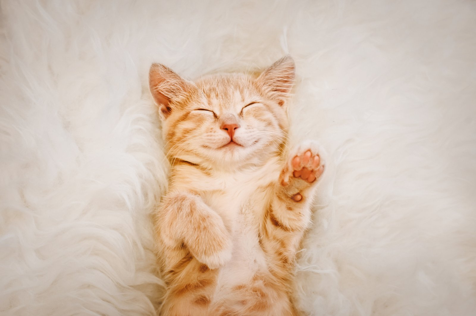 To get a good night's beauty sleep, make sure your sleeping area has the optimal conditions. (iStock Photo)