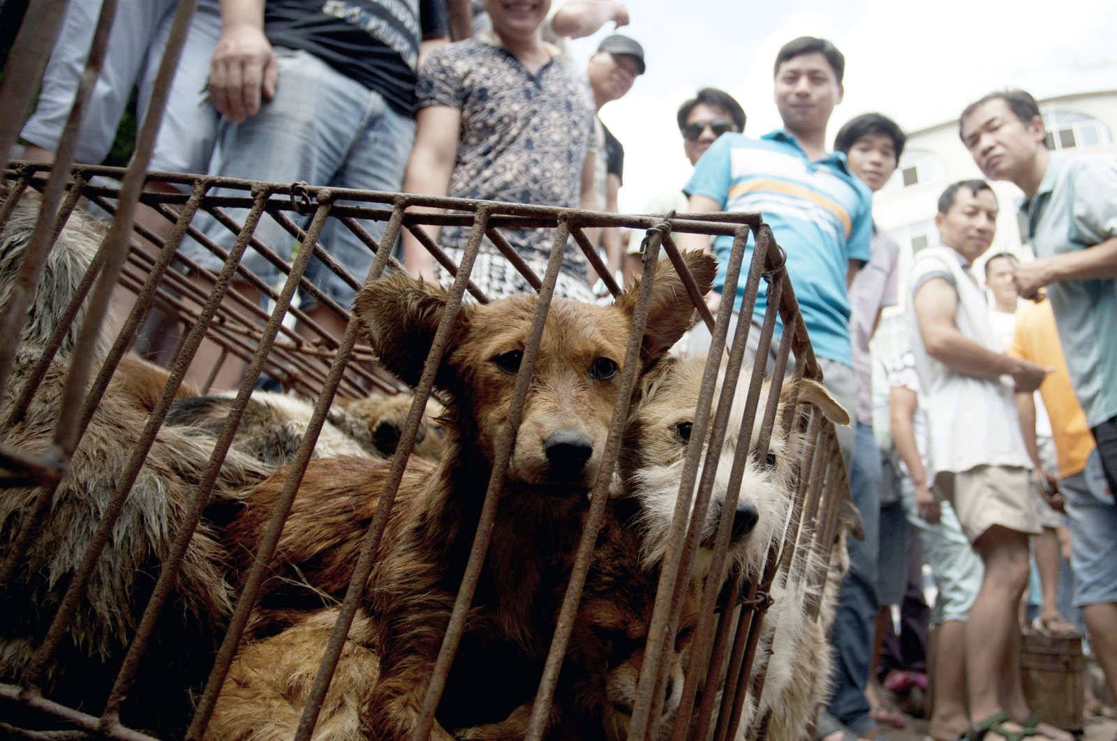 In this June 21, 2015 file photo, dogs in cages are sold by vendors at a market during a dog meat festival in Yulin in South China's Guangxi Zhuang autonomous region. (AP Photo)