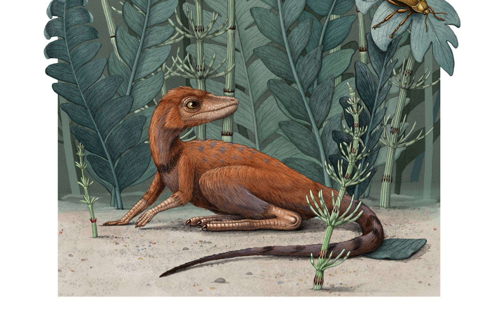 Kongonaphon kely, a tiny reptile believed to be an ancestor of dinosaurs and pterosaurs, is seen in its natural environment in the Triassic Period in an undated illustration provided on July 6, 2020. (Alex Boersma/Handout via REUTERS)