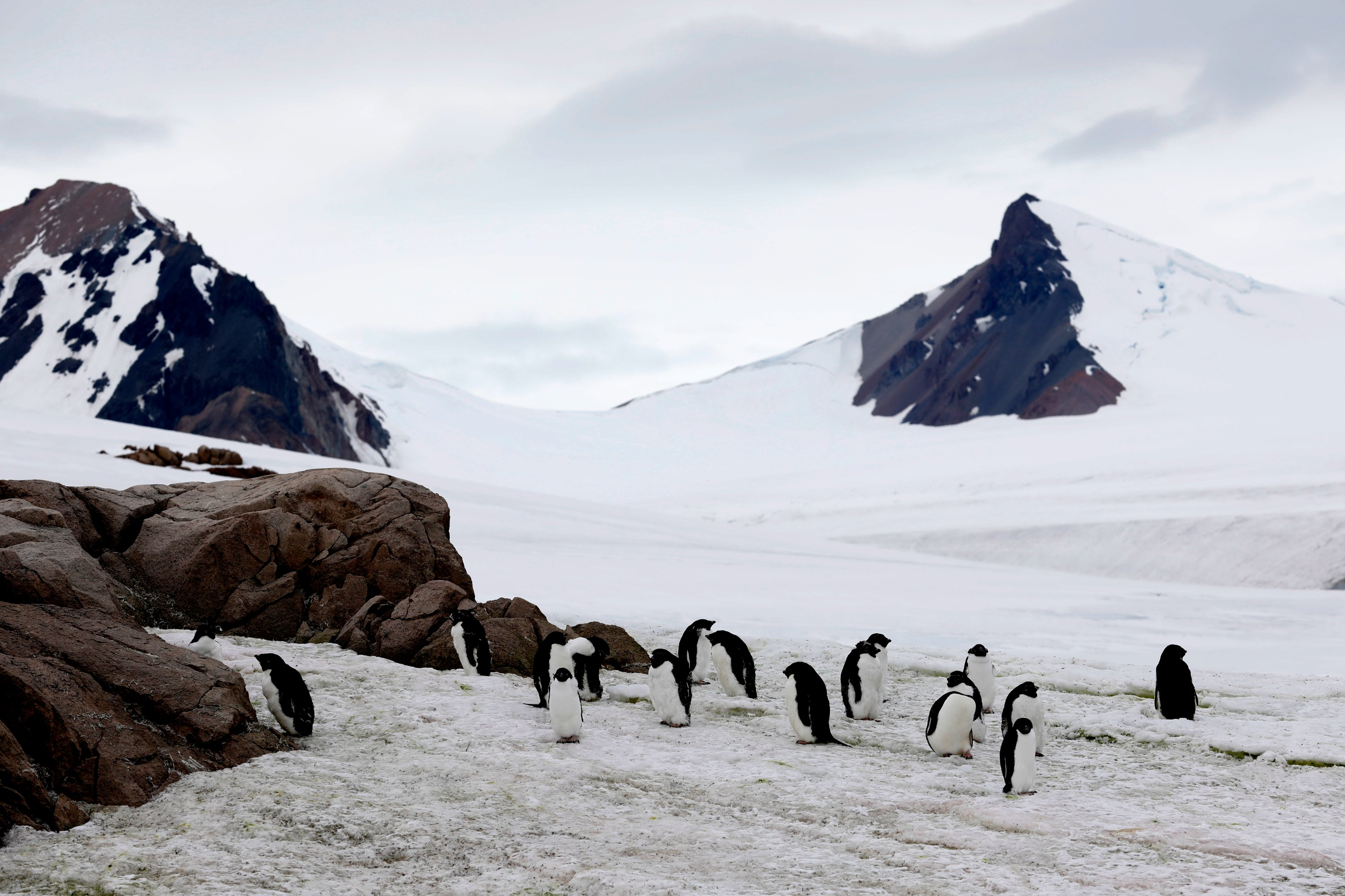 It's possible to spot colonies of penguins everywhere you go on the continent. (Photo by Hayrettin Bektaş)