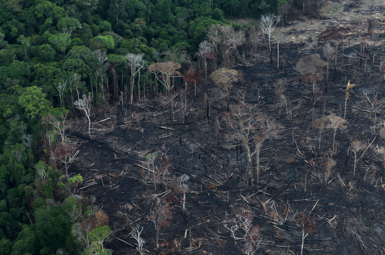 Image result for amazon rainforest deforesttion