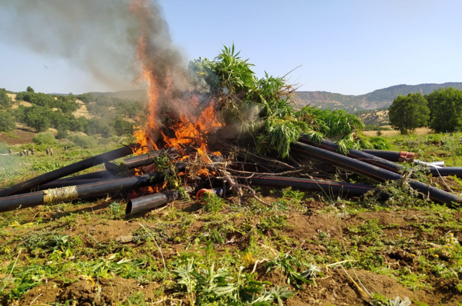 Seized cannabis roots and irrigation pipes are being destroyed in a field following a gendarmerie operation in the Lice district of Turkey's southeastern Diyarbakır province, July 10, 2020. (Diyarbakır Governorate via AA)