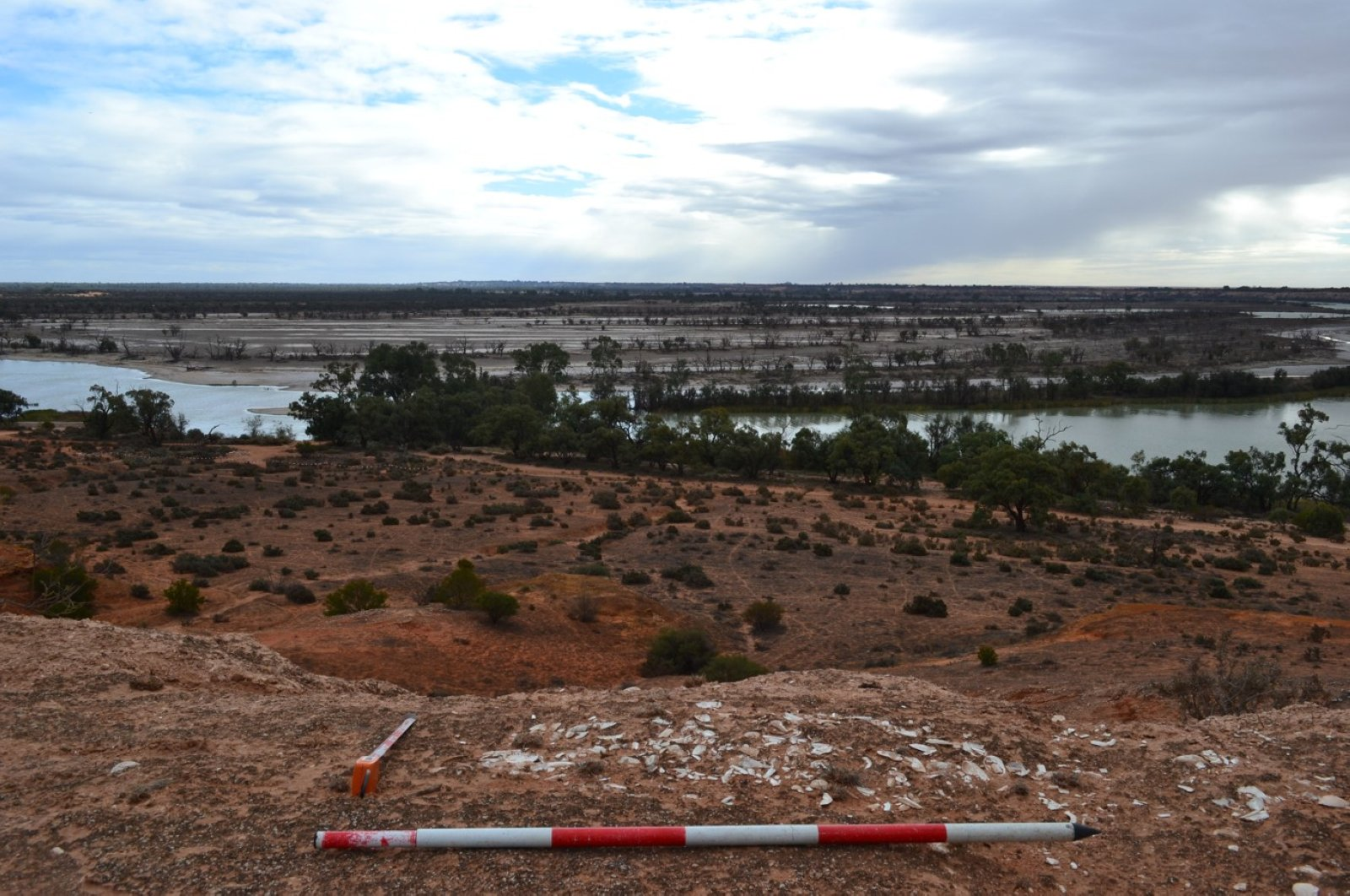 Shells exposed on the Pike cliff line on the River Murray (Photo courtesy of Flinders University)