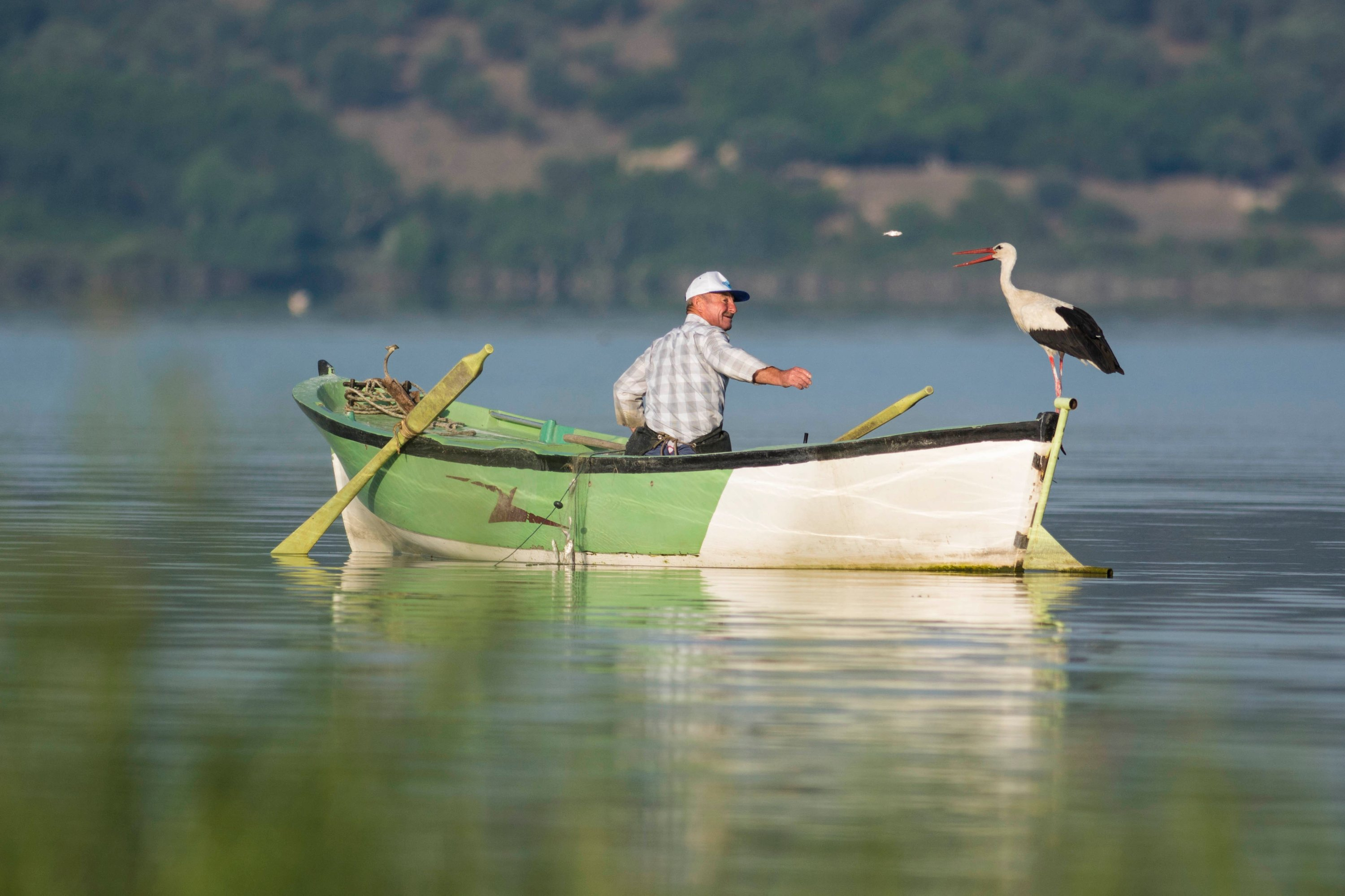 A fisherman throws a small fish to a white stork on Lake Uluabat, Karacabey, Bursa province, northwestern Turkey, Sept. 18, 2019. (IHA Photo)