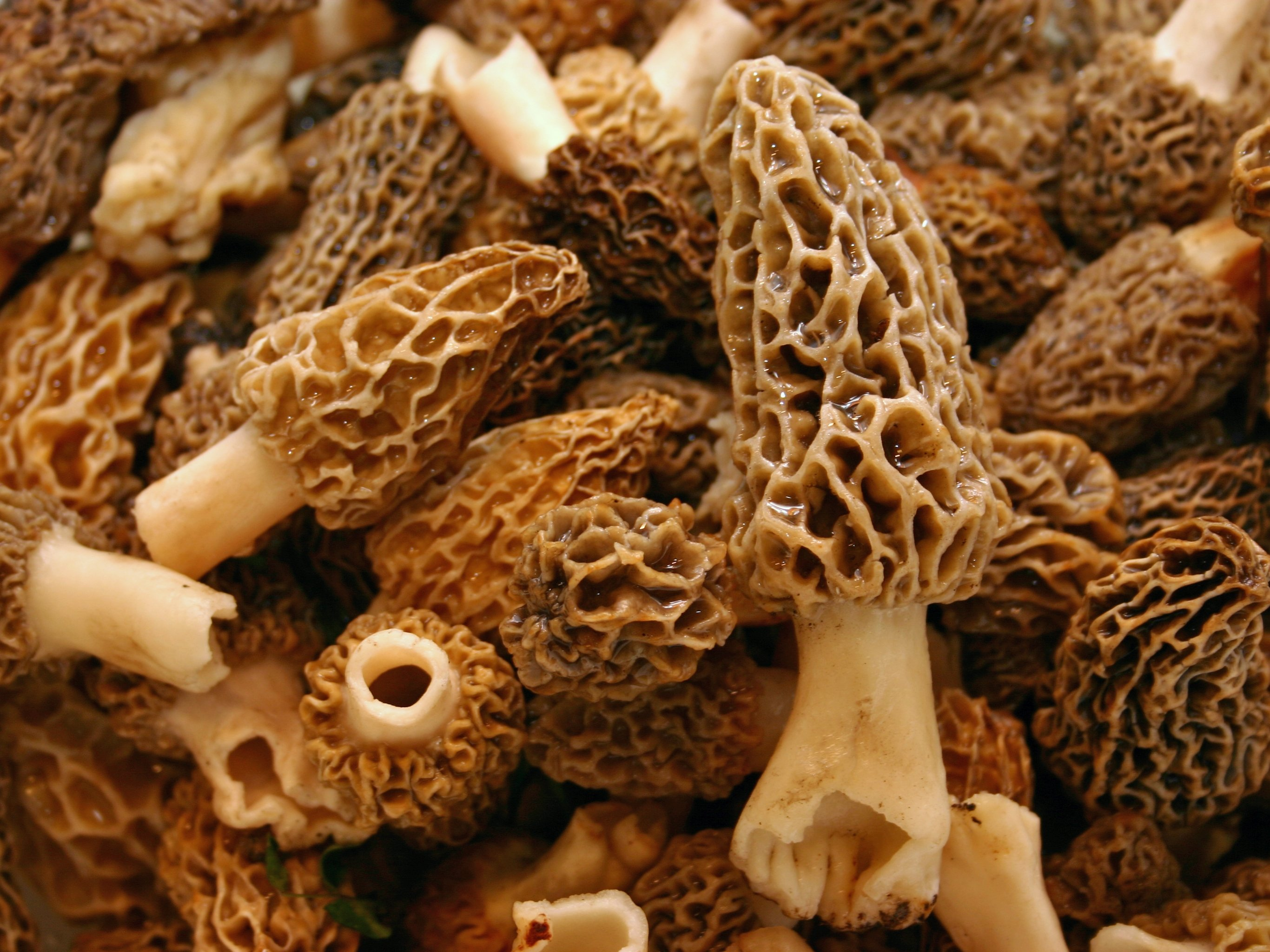Usually found between the months of March and May, morel mushrooms are dried in the summer to be consumed year-round. (iStock Photo)