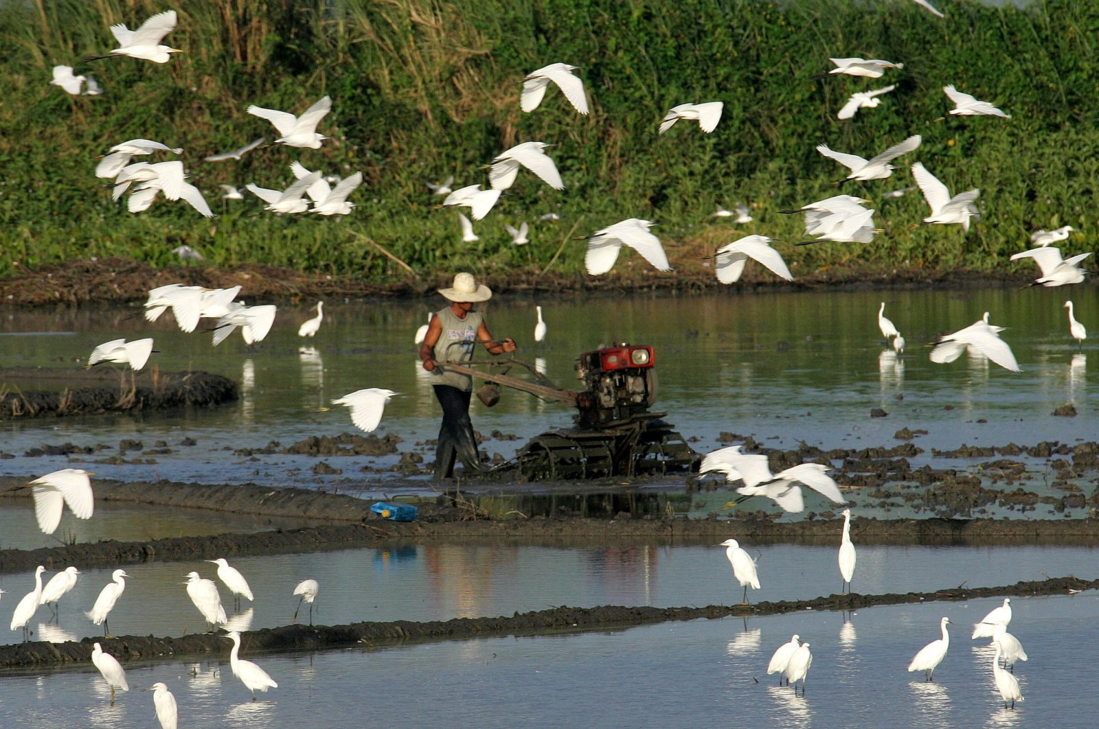 A Filipino farmer ploughs a rice field as a flock of migratory birds gather at one of the country's largest wetlands in Candaba town, in Pampanga province, north of Manila, Jan. 14, 2006. (Reuters Photo)