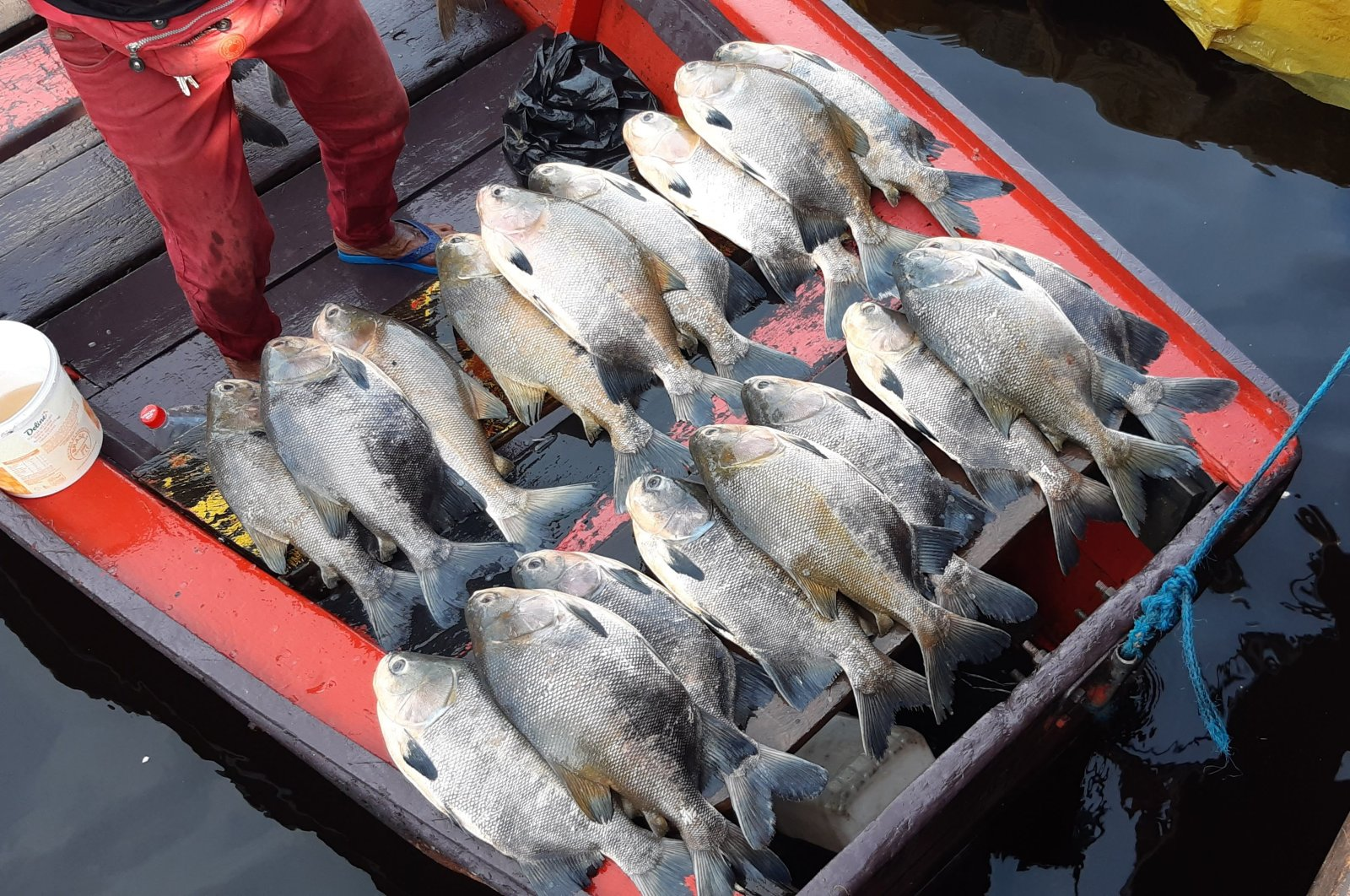 Fish on display at the edge of the city of Manaus, Brazil, caught in the Amazon River, July 25, 2020. (Shutterstock Photo)