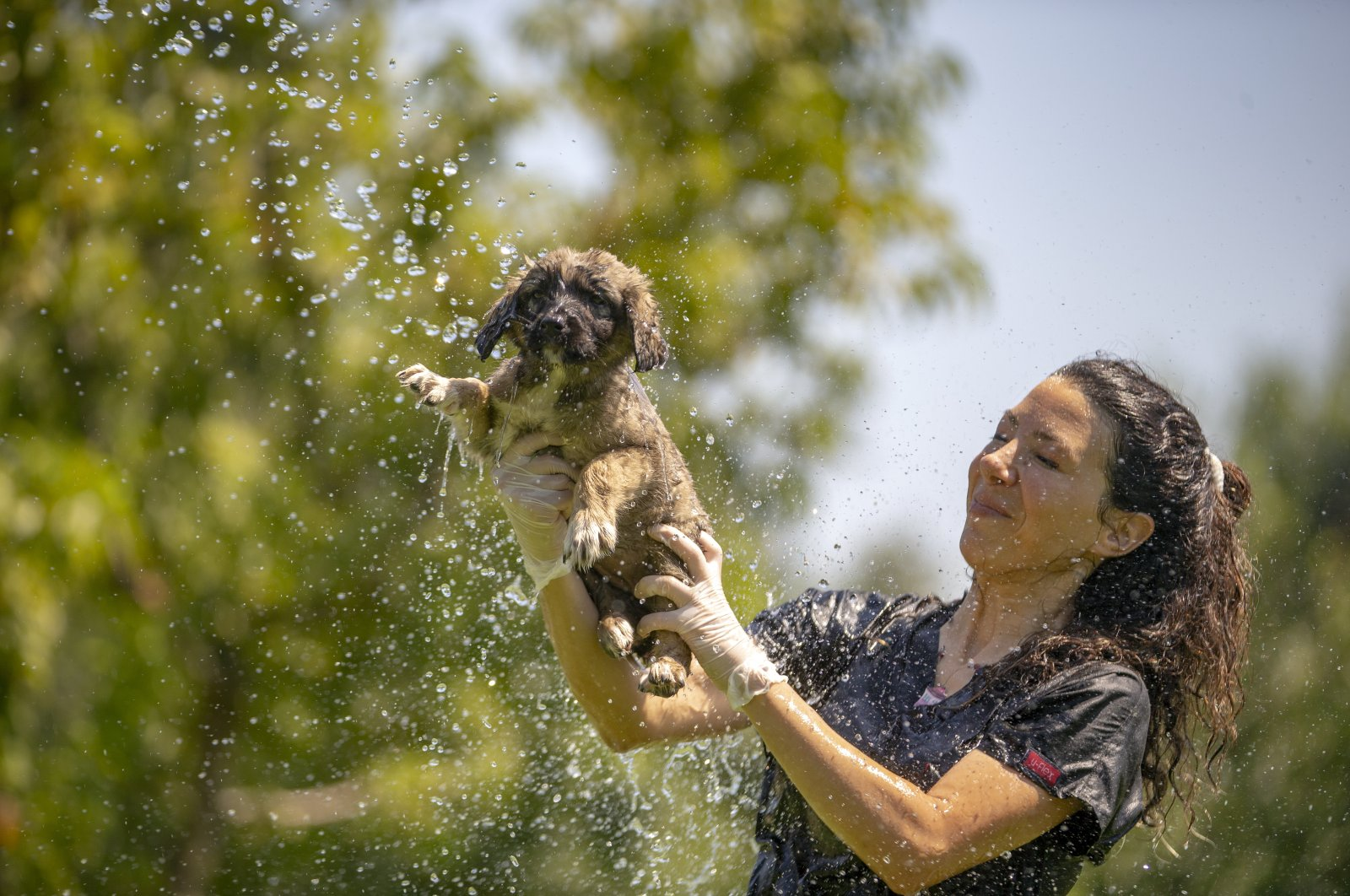 A veterinarian holds a dog as water from a hose sprays on a puppy, in Konyaaltı district, in Antalya, southern Turkey, Aug. 3, 2020. (AA Photo)