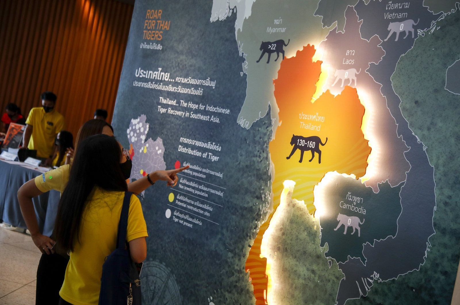 """People look at a map of Indo-China tigers' distribution at the exhibit """"Roar for Thai Tigers"""" to celebrate International Tiger Day in Bangkok, Thailand, July 29, 2020. (EPA Photo)"""