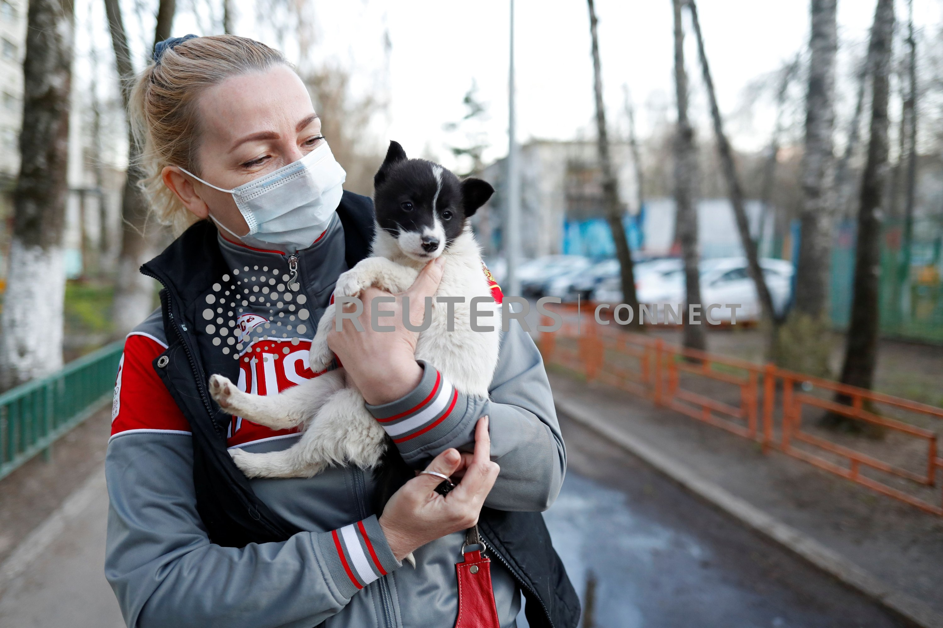 Volunteer Elena wearing a protective face mask carries Locky, a 1.5-month-old mongrel puppy, to its new home in Krasnogorsk outside Moscow, Russia, April 29, 2020. (Reuters Photo)