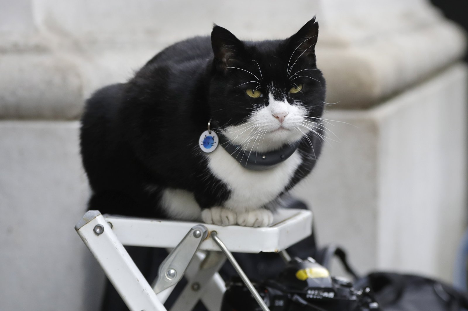 Palmerston, the Foreign Office cat sits on a photographer's ladder as media await the departure of Britain's Prime Minister Theresa May from 10 Downing Street in London, Feb. 12, 2019. (AP Photo)