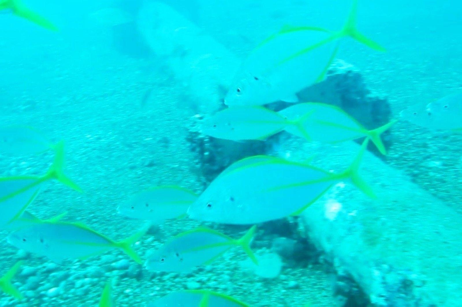 A school of fish swims off Konyaaltı Beach, in Antalya, southern Turkey, Aug. 11, 2020. (IHA Photo)