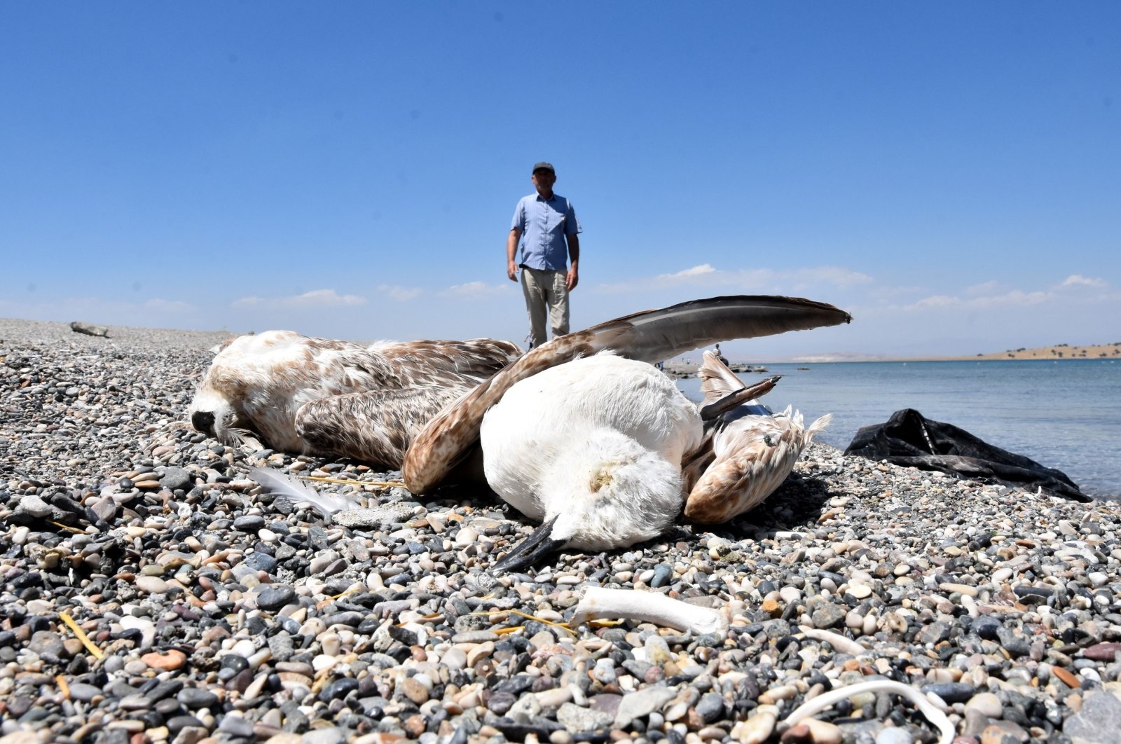 Dozens of dead seagulls have been found on the shores of Lake Van, eastern Turkey, in recent weeks. (DHA Photo)