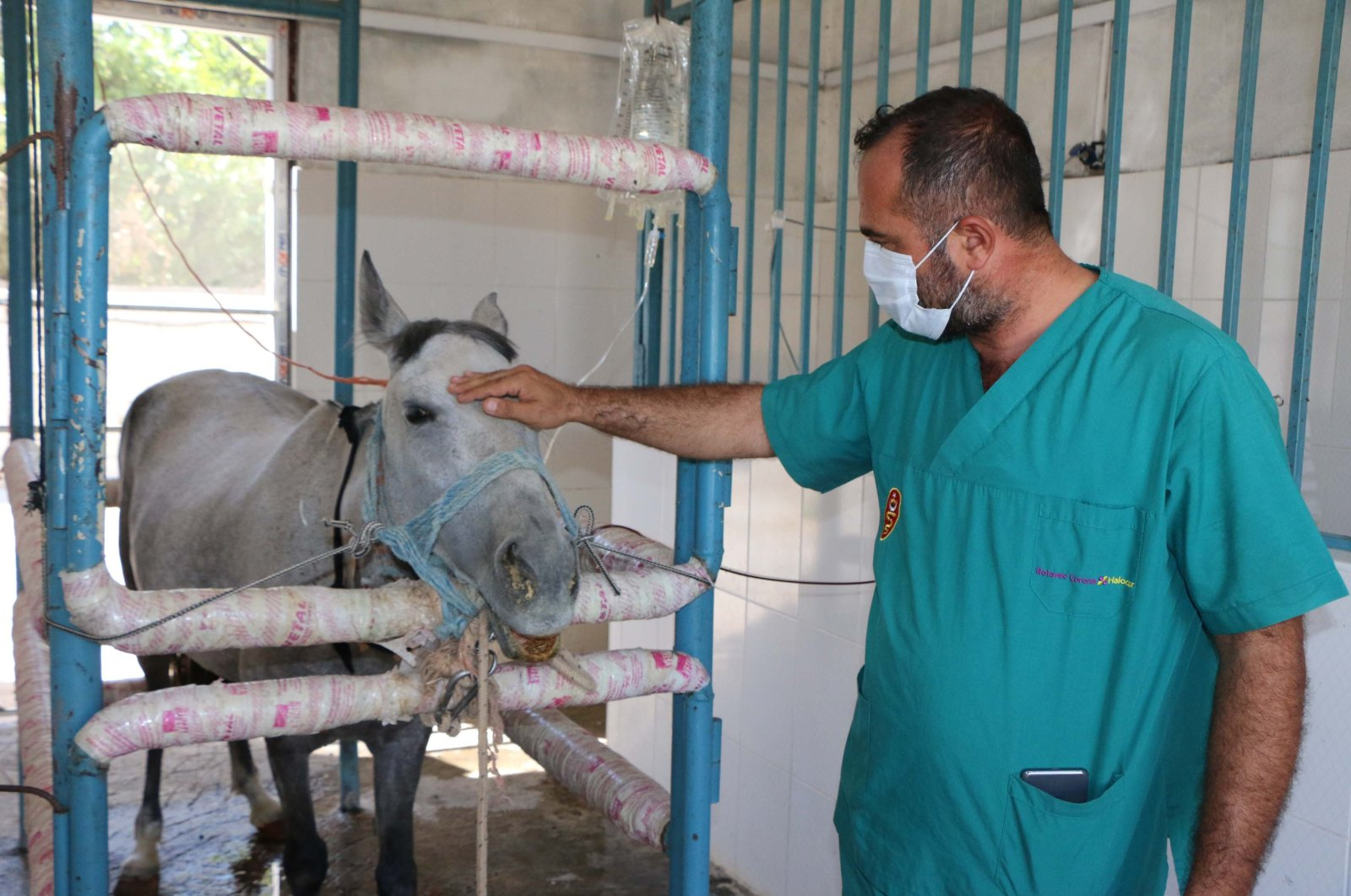 A horse is hooked up to a serum in the laboratory in Adıyaman, southeastern Turkey, Aug. 14, 2020. (DHA Photo)