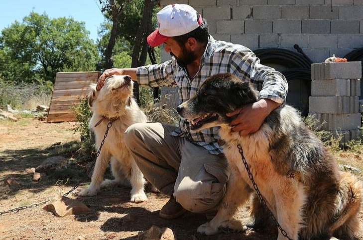 A villager poses with two dogs he adopted in Konya, central Turkey, July 25, 2018. (AA Photo)