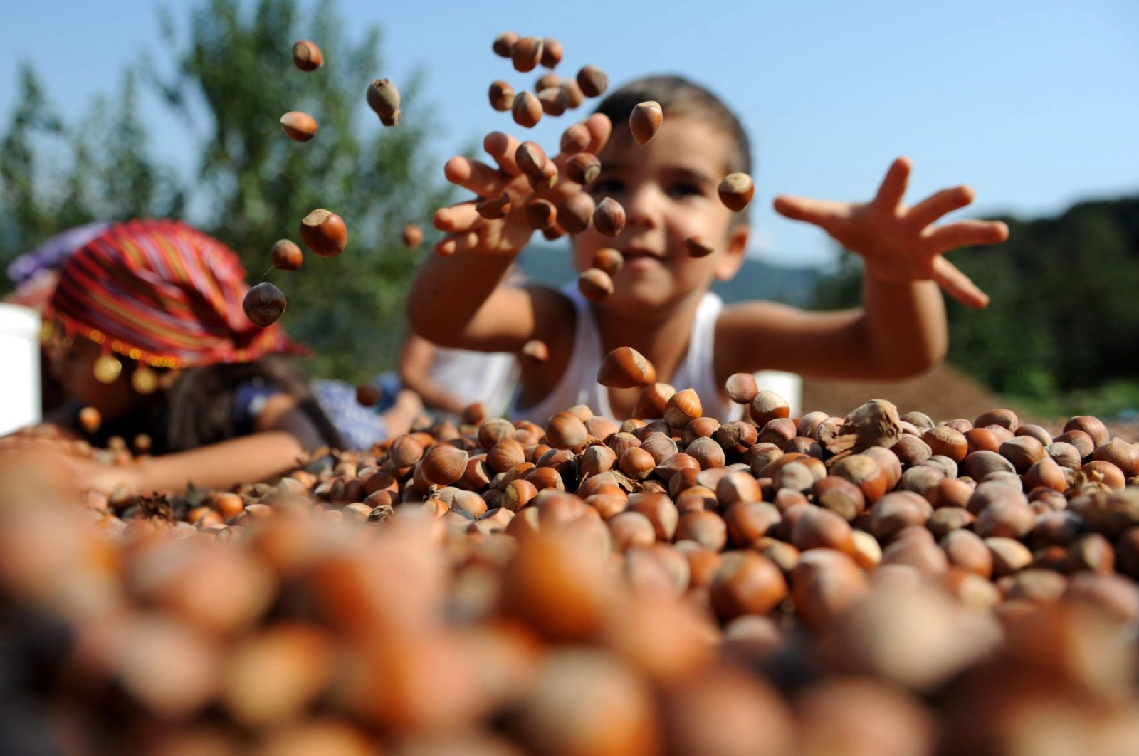 Hazelnut exports have generated over $2.27 billion in revenue from September 2019 to August 2020. (AA Photo)