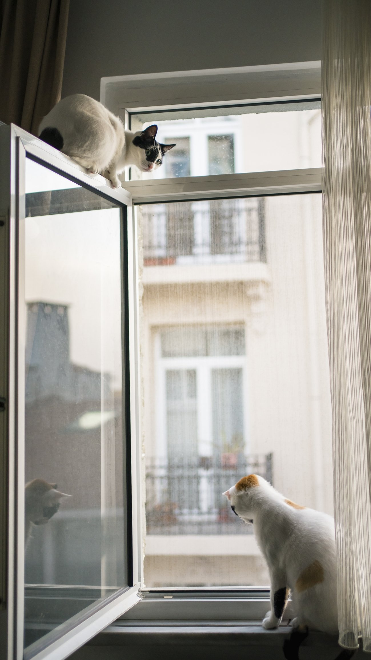 If you have cats or other pets, don't forget to ask the landlord about their house pet policies before renting. (iStock Photo)