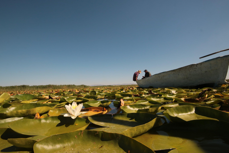 每年5月至8月之間,貝西希爾湖(LakeBey?ehir)的水利小花盛開,于2020年8月20日在科尼亞(Konya)創造了美景。