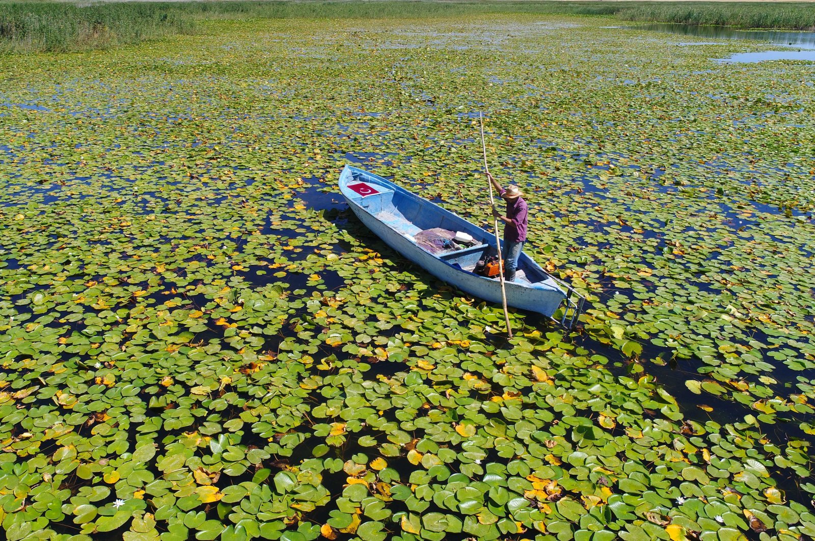 A fisherman rides on his boat through a sea of water lilies in Lake Beyşehir, Konya, Aug. 20, 2020. (DHA Photo)