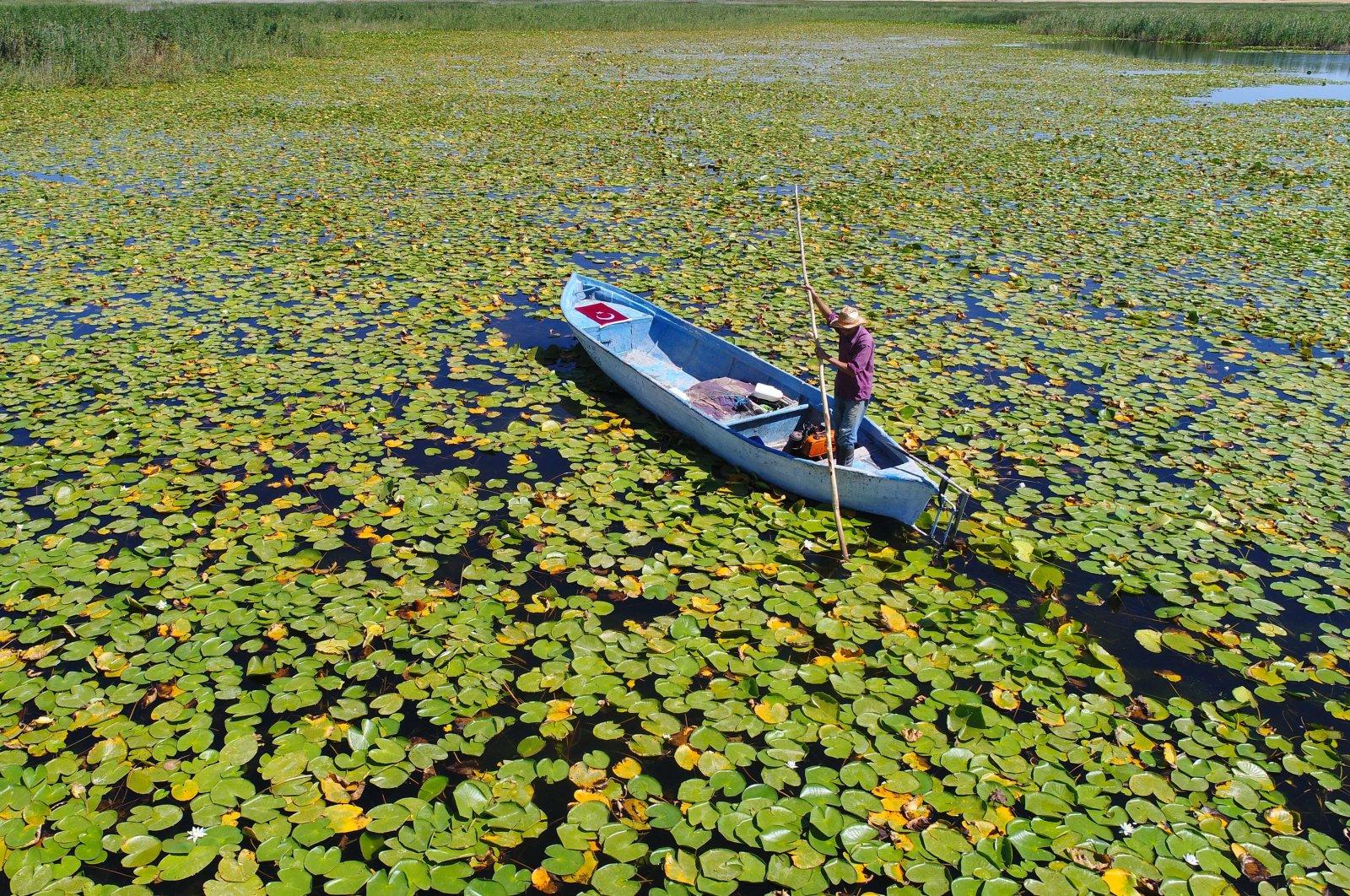 A fisherman rides on his boat through a sea of water lilies in Lake Beyşehir, Konya, Aug. 20, 2020. (DHA Photo)
