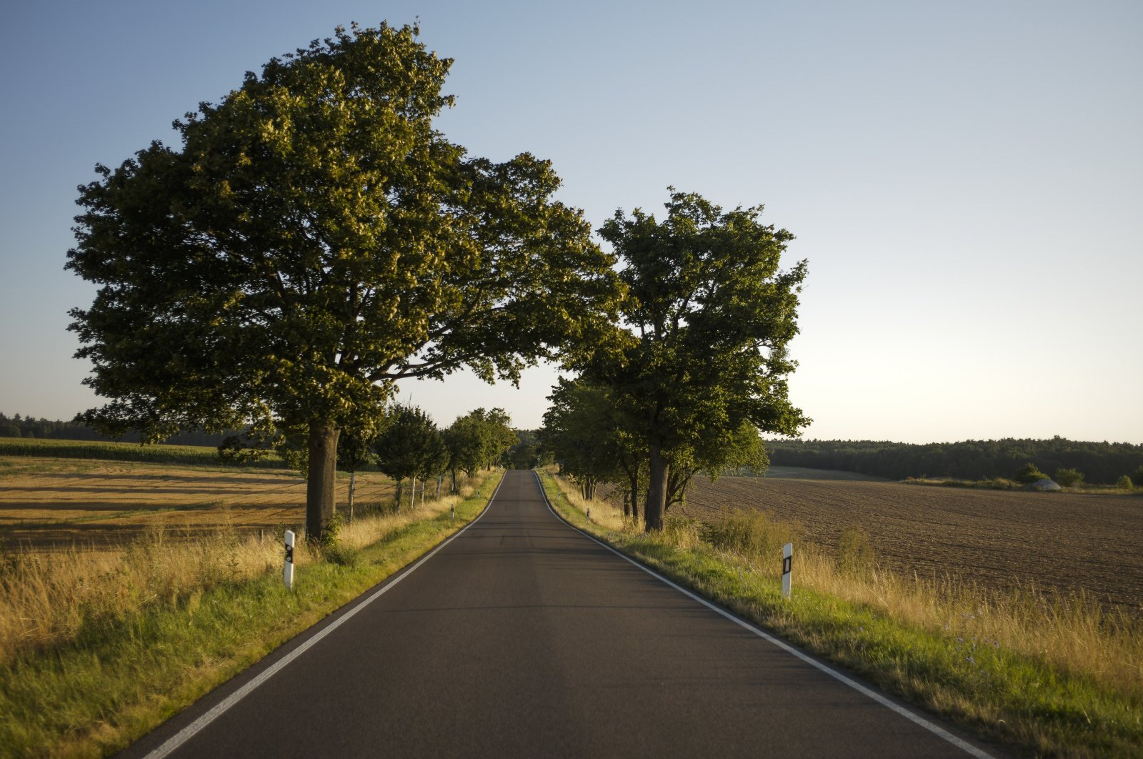Trees flank a road in a rural region near the village of Proetzel, Germany, Aug. 12, 2020. (AP Photo)