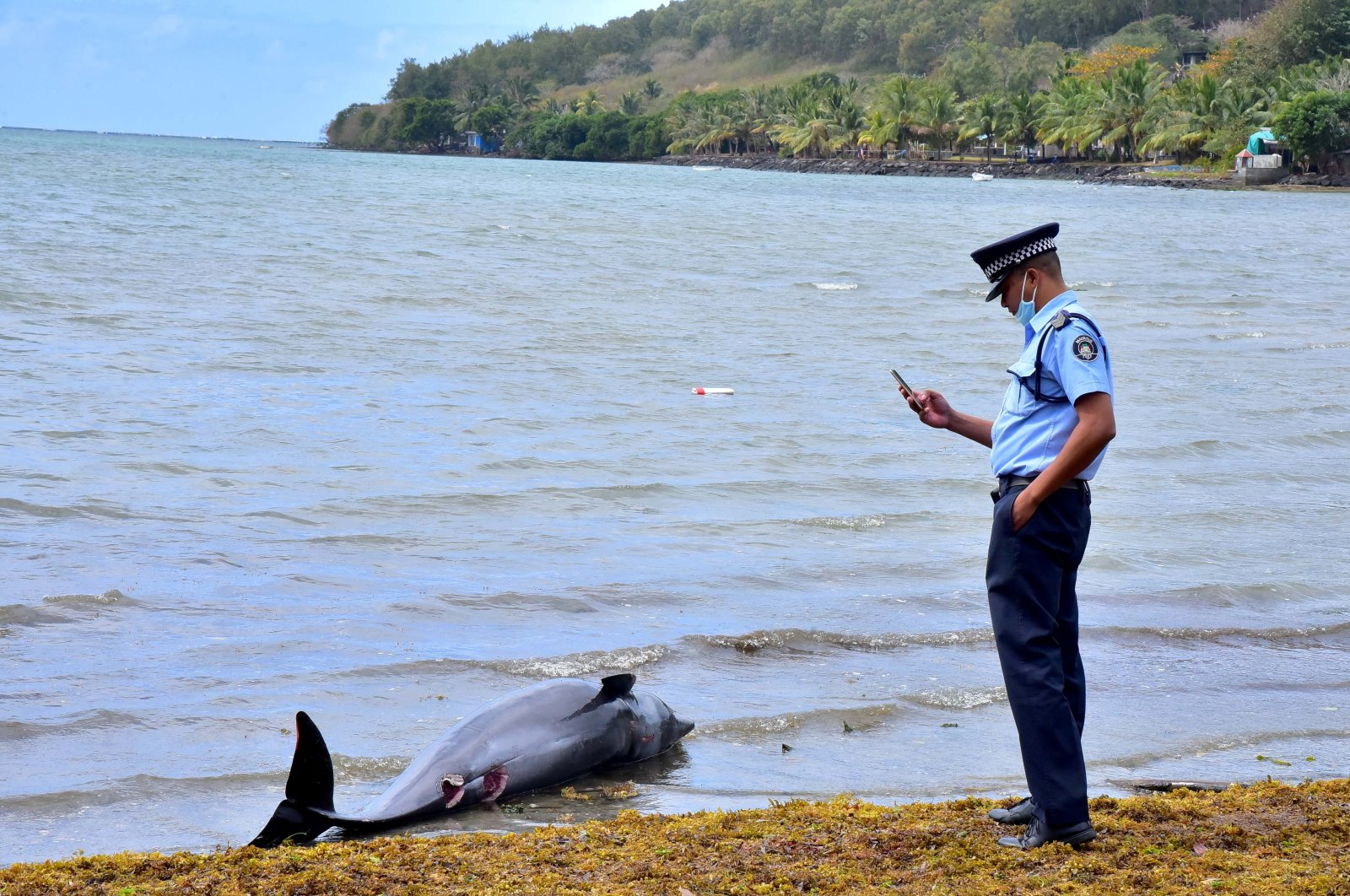 A policeman takes a photograph of a carcass of a dolphin that died and was washed up on shore at the Grand Sable, Mauritius on Aug. 26, 2020. (Reuters Photo)