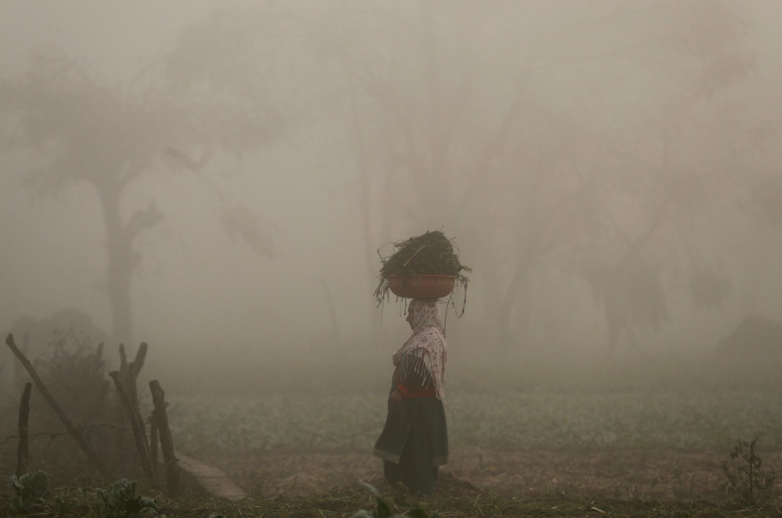 A woman carries a basket on her head through a field of vegetables on a foggy morning in the province of Srinagar, Kashmir, Nov. 20, 2019. (Reuters Photo)