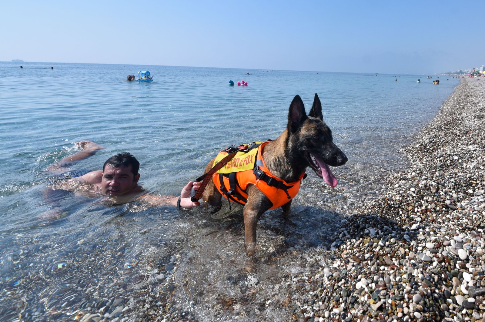 Fox pulls a swimmer to the beach, Antalya, southern Turkey, Sept. 2, 2020. (DHA Photo)