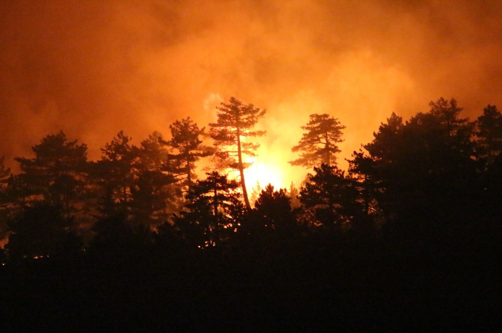 Flames engulf the forest in Denizli, western Turkey, Sept. 4, 2020. (İHA Photo)