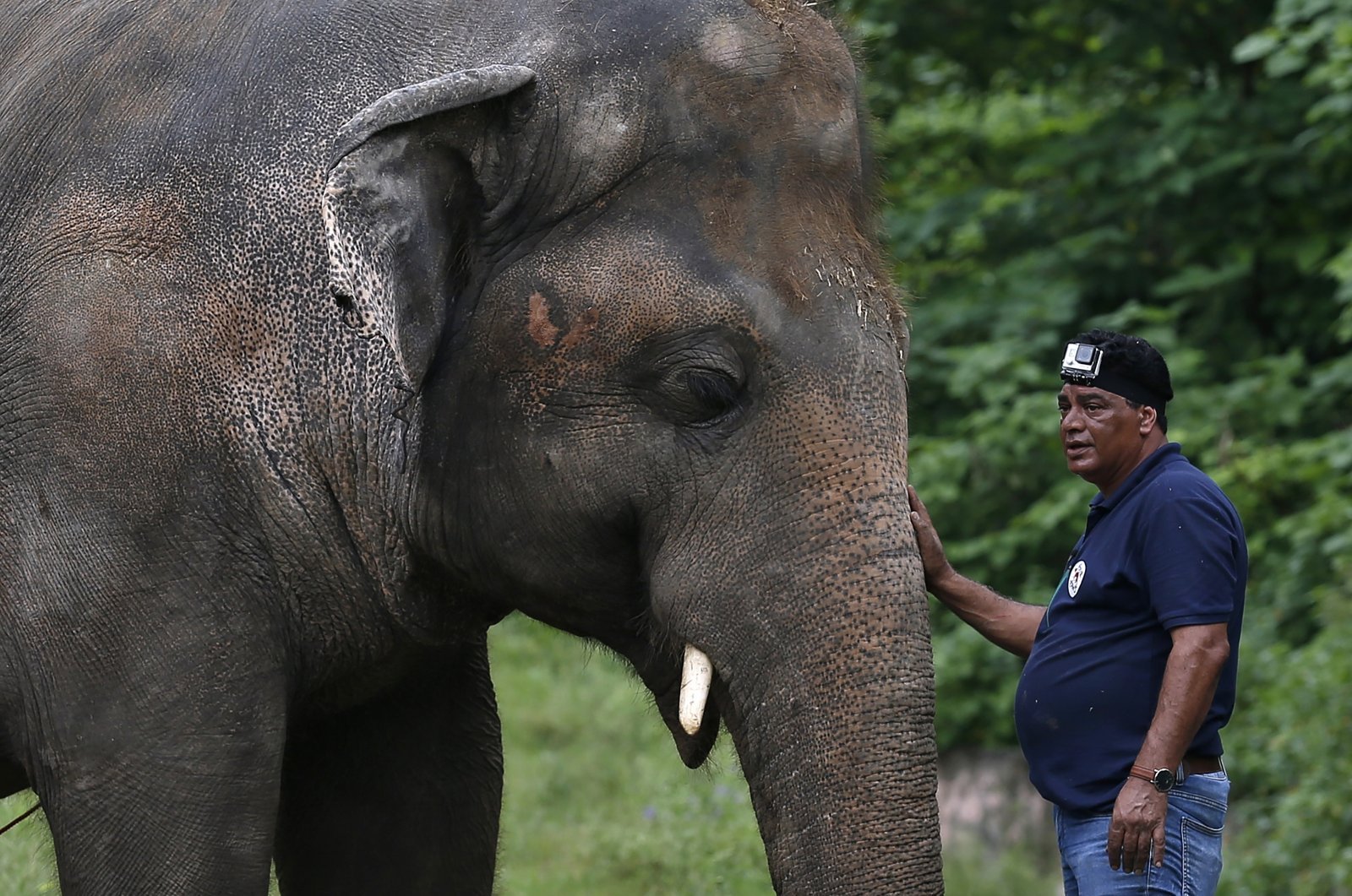 """A veterinary from the international animal welfare organization """"Four Paws"""" offers comfort to an elephant named """"Kaavan"""" during his examination at the Maragzar Zoo in Islamabad, Pakistan, Sept. 4, 2020. (AP Photo/Anjum Naveed)"""