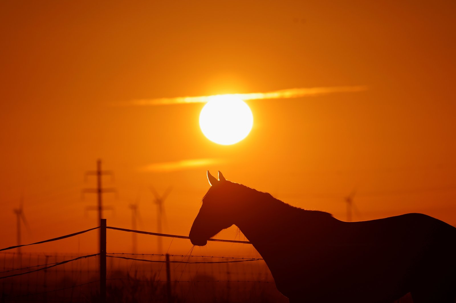 A horse stands in a field at sunrise in Cuvillers, France, Sept. 7, 2020. (Reuters Photo)