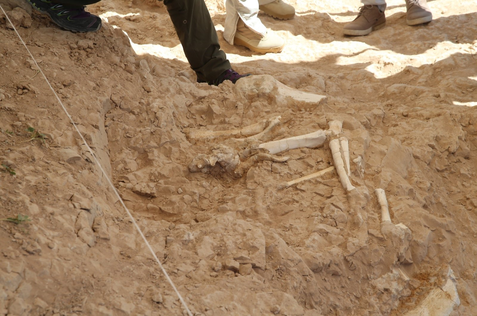 A view of fossils at the site, in Kayseri, central Turkey, Sept. 9, 2020. (İHA Photo)