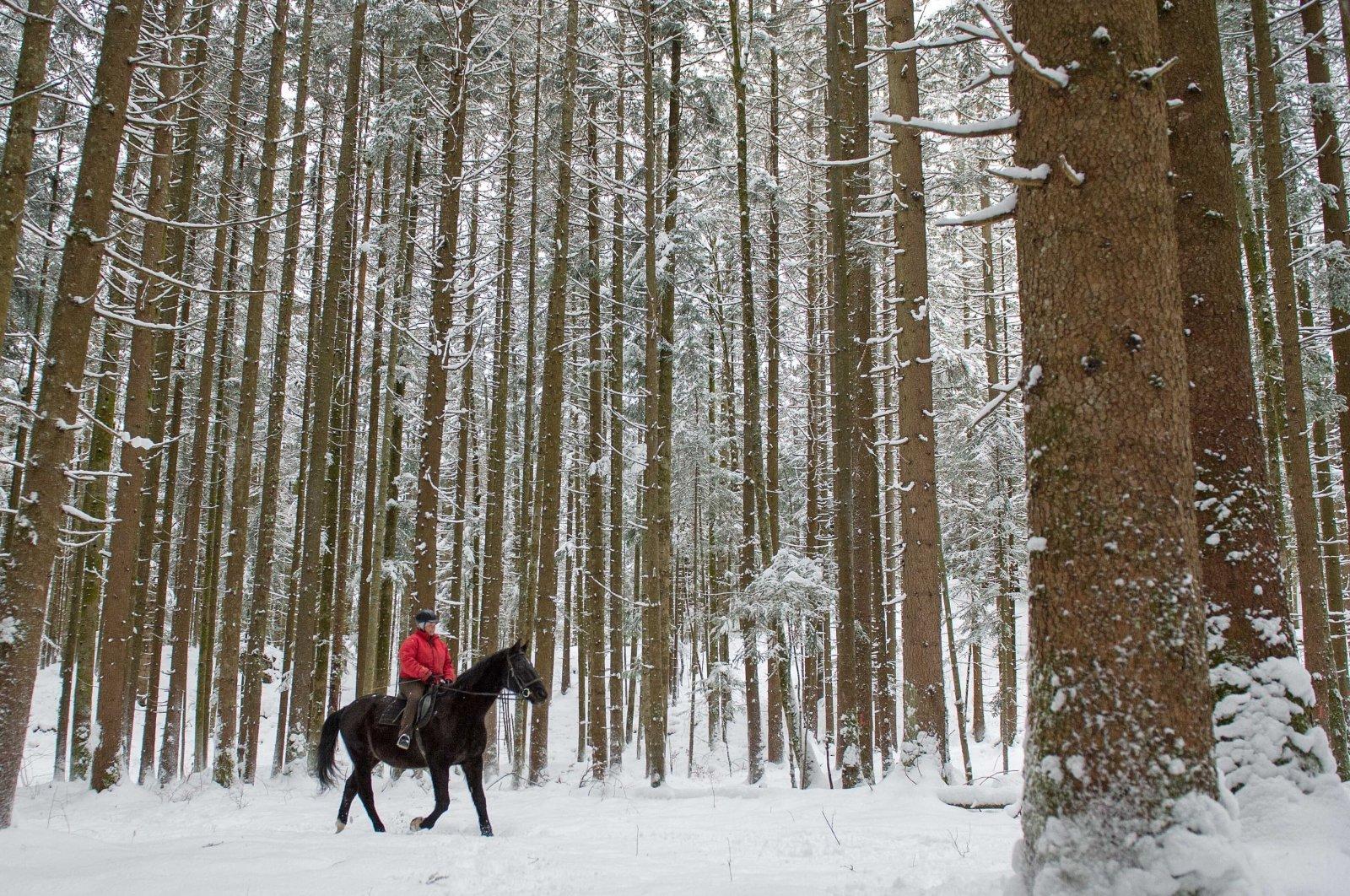 A woman rides with her horse through a forest near Lofer, Austrian province of Salzburg, Feb. 2, 2015. (AP Photo)