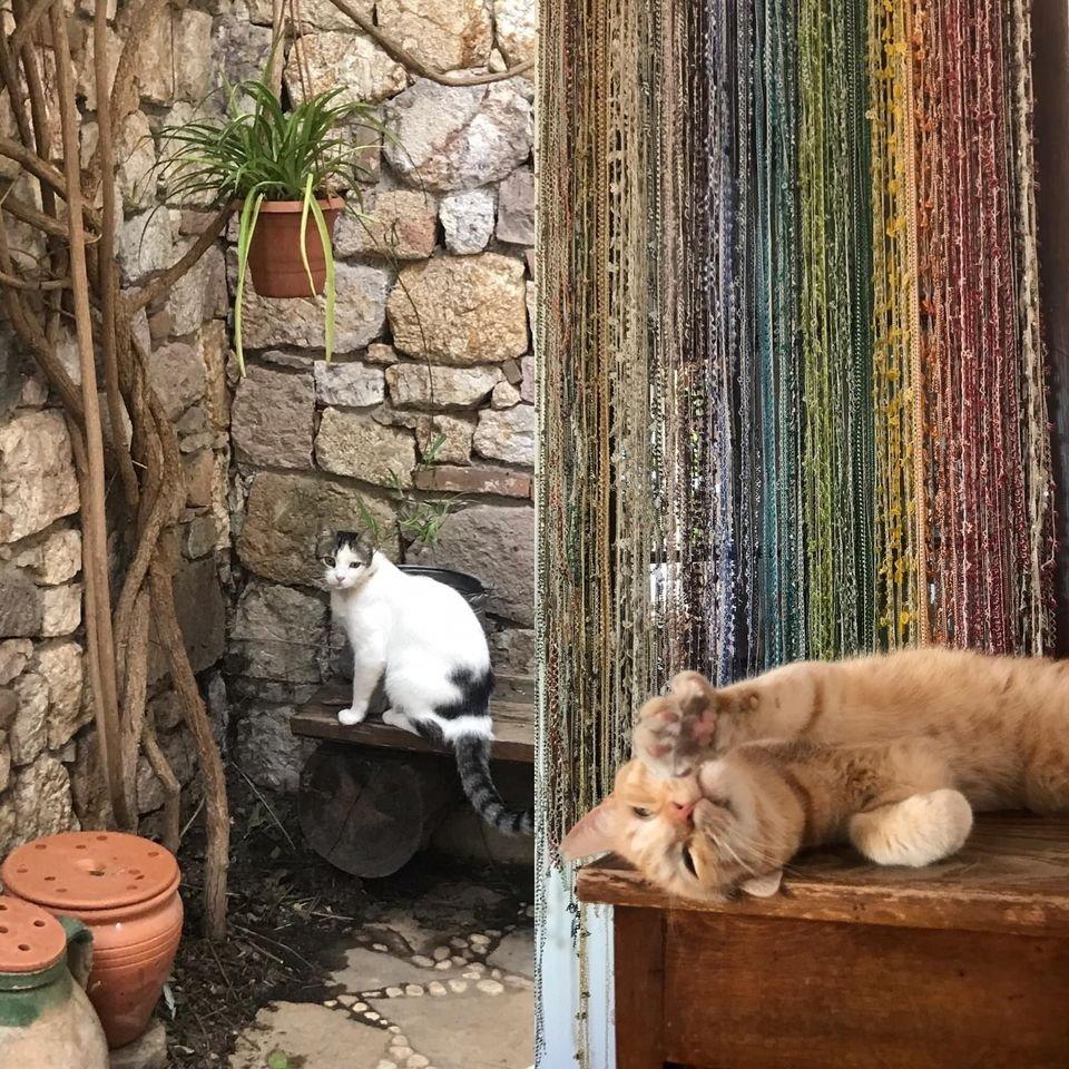 Here are some of the Çöp (M)adam initiative's furry helpers. (Facebook photo courtesy of Çöp (M)adam)