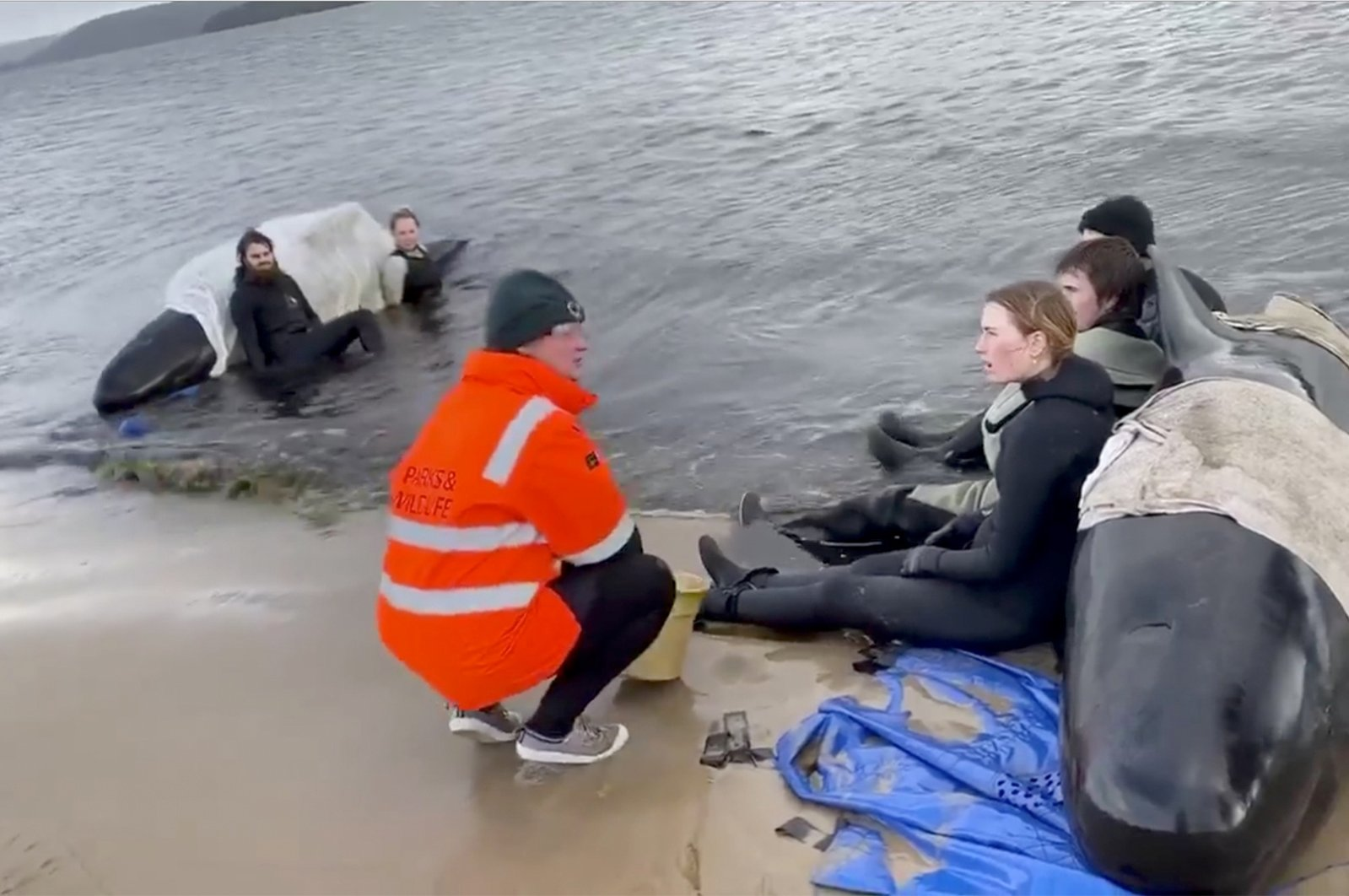 Whale rescue efforts take place at Macquarie Heads in Tasmania, Australia, Sept. 23, 2020, in this still picture obtained from social media video. (Reuters Photo)