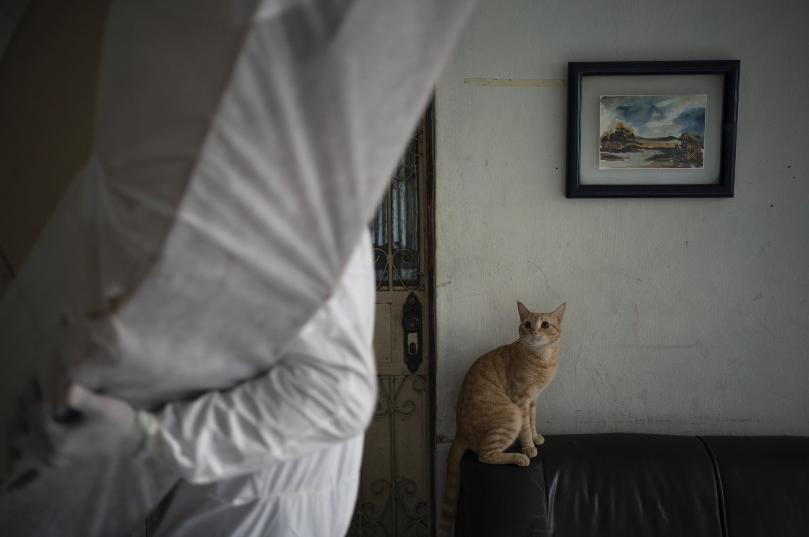 A cat stares at aN SOS Funeral worker who prepares to remove the body of a man who died at his home amid the new coronavirus pandemic in Manaus, Brazil, May 9, 2020. (AP Photo)