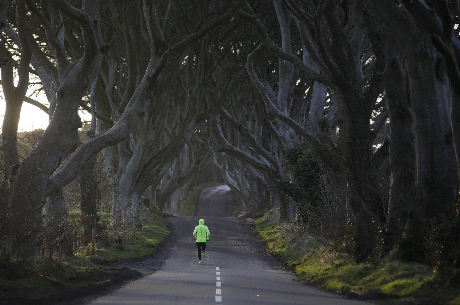 A jogger runs along Bregagh Road at Dark Hedges, Armoy, Northern Ireland, Feb. 10, 2016. (AP Photo)
