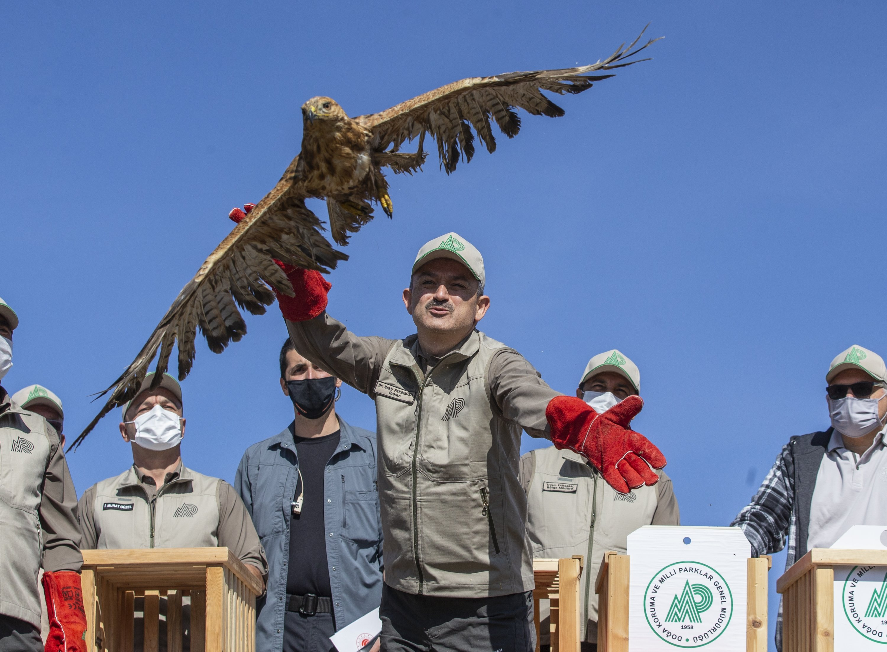 Agriculture and Forestry Minister Bekir Pakdemirli releases a hawk to the wild in Çamkoru Nature Park, Ankara, Turkey, Oct. 4, 2020. (AA Photo)