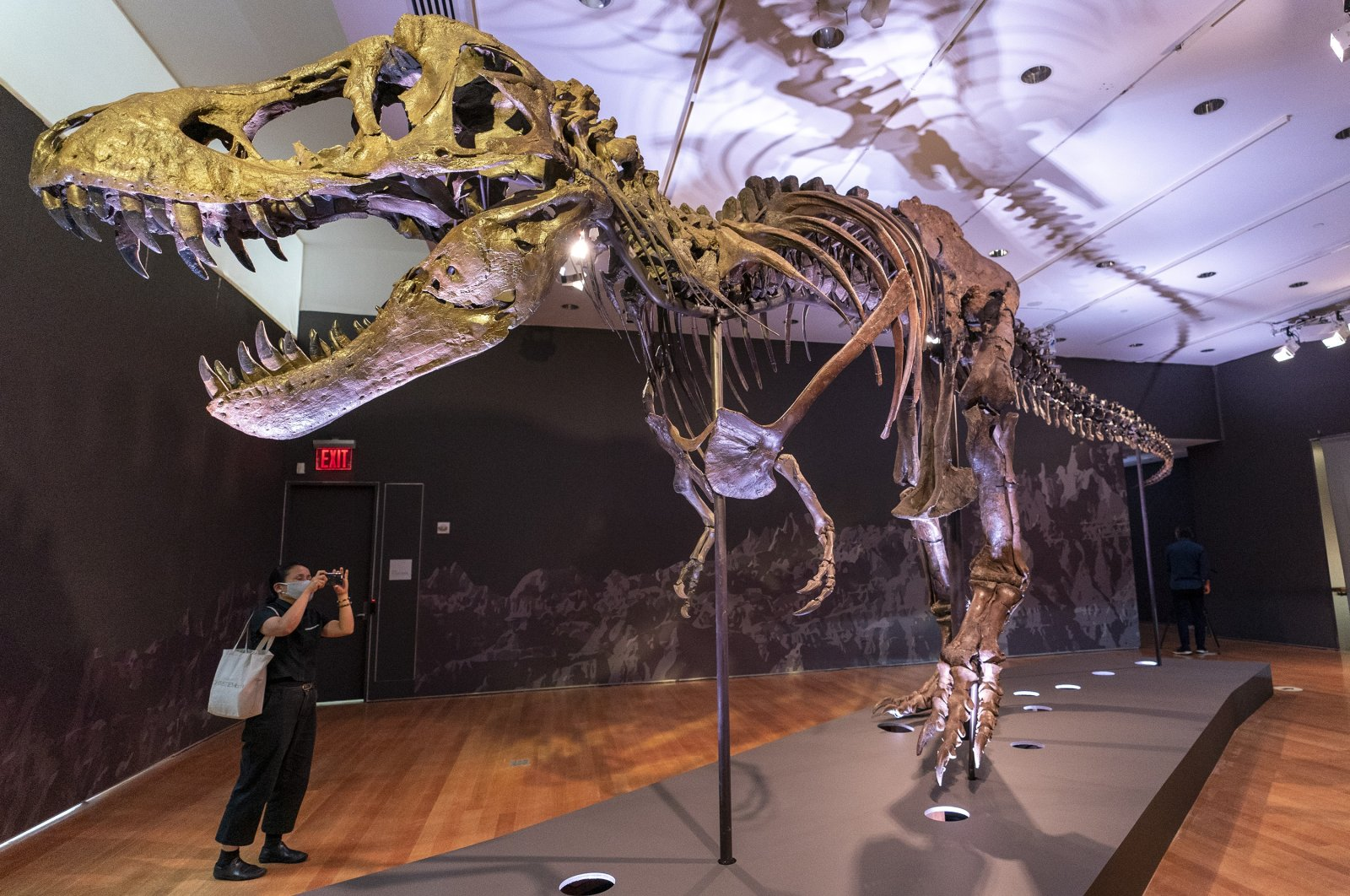 Stan, one of the largest and most complete Tyrannosaurus rex fossils ever discovered, is on display at Christie's in New York, U.S., Sept. 15, 2020. (AP Photo)